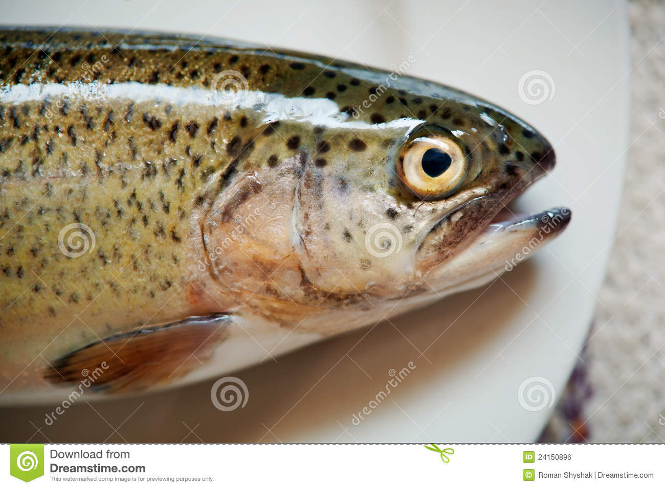 ... -up picture of a fresh forel fish on the plate, only head is seen
