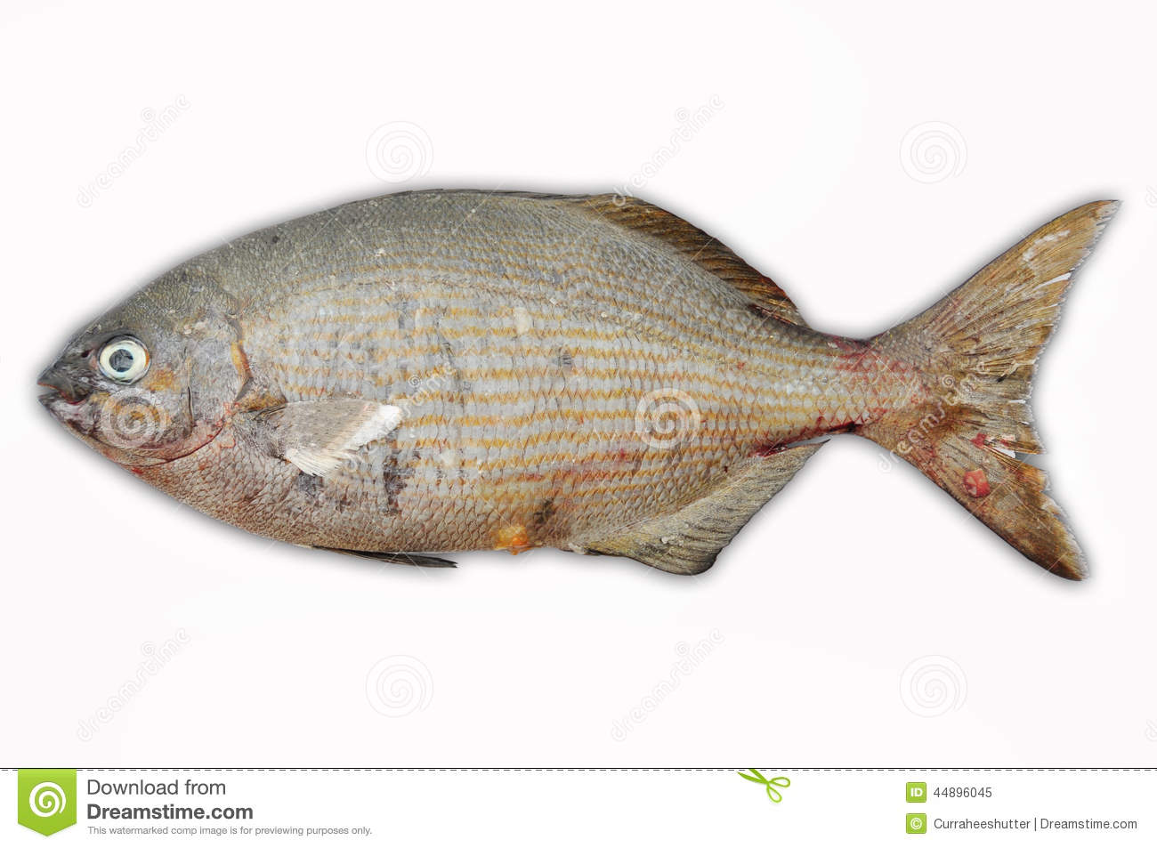 Fresh fish isolate on white back ground fillet of fish for What is fish food made of