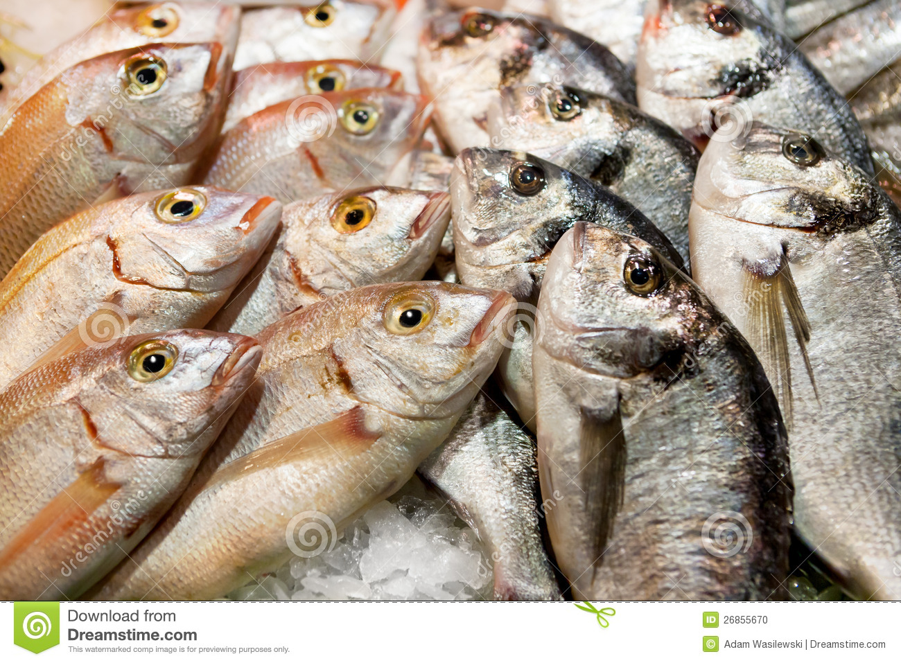 Fresh fish at the market stock photo image 26855670 for Fish in spanish