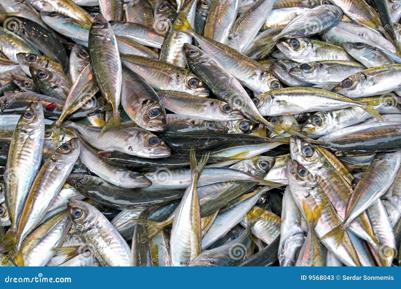 Fresh fish at the market stock photos image 9568043 for Bud s fish market