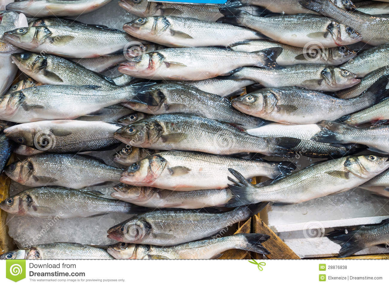 Fresh fish offer for sale royalty free stock photos for Stock fish for sale