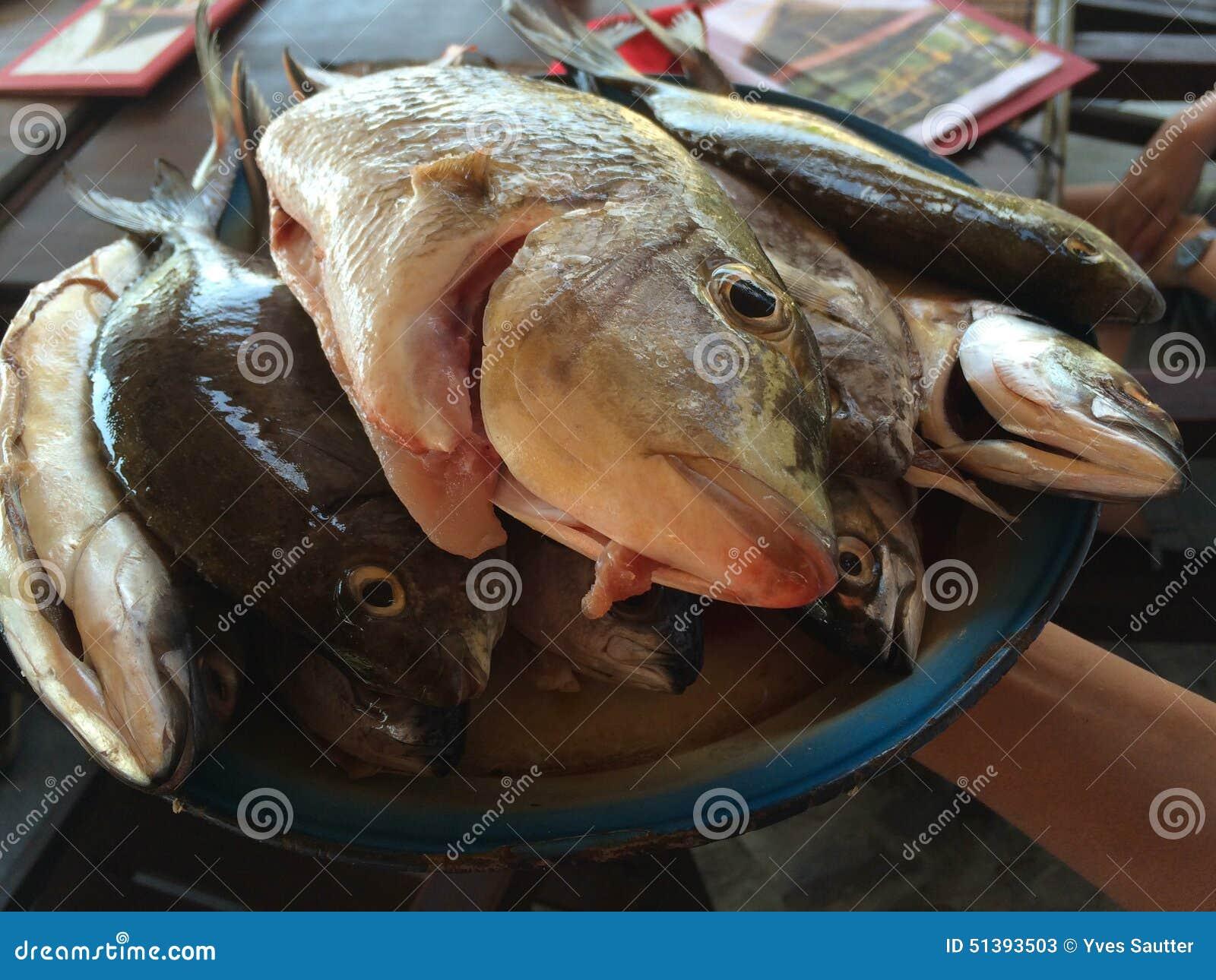 Fresh Fish On Pemuteran Beach Bali Indonesia Stock Photo