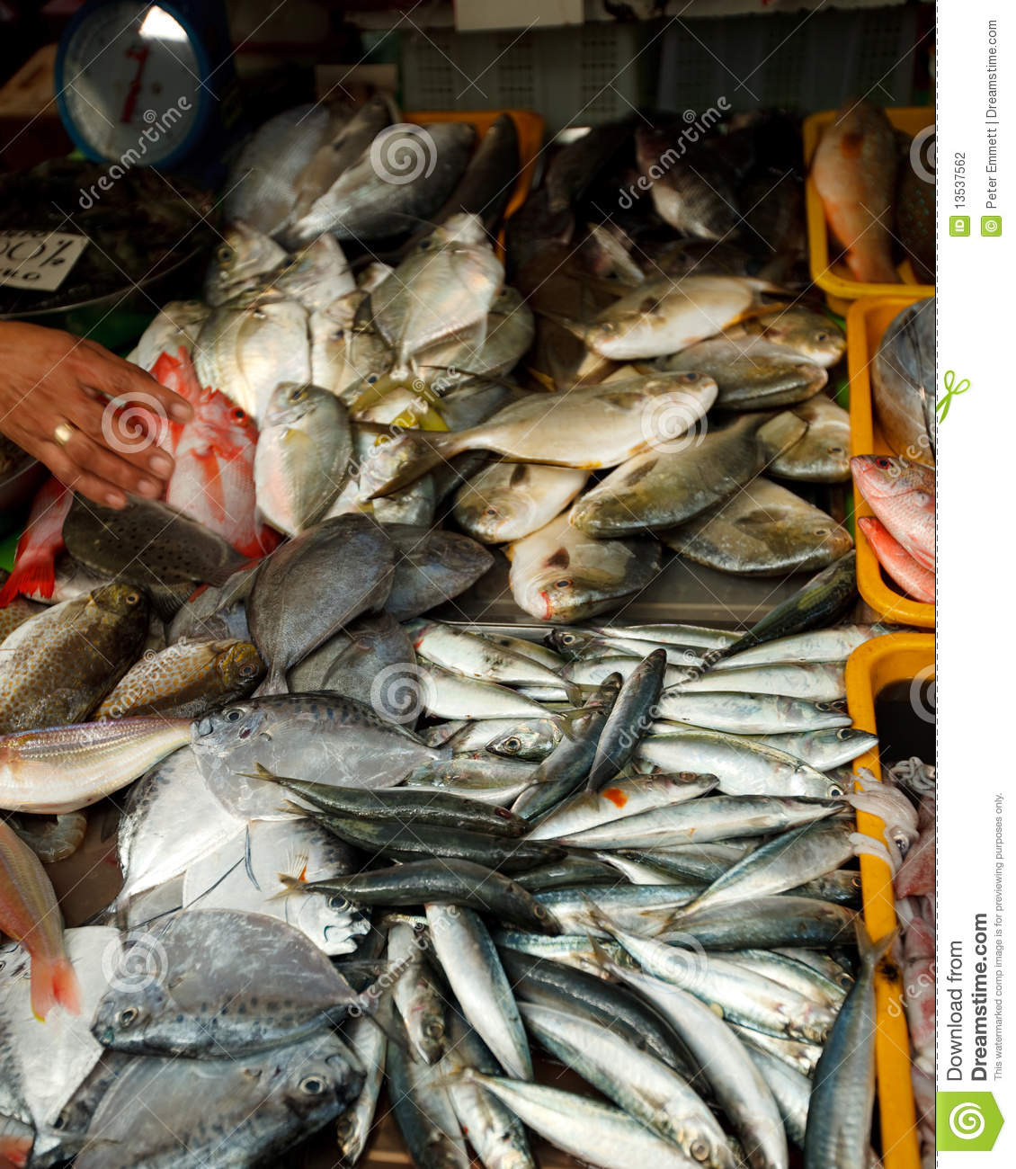 Fresh fish for sale stock photography image 13537562 for Stock fish for sale