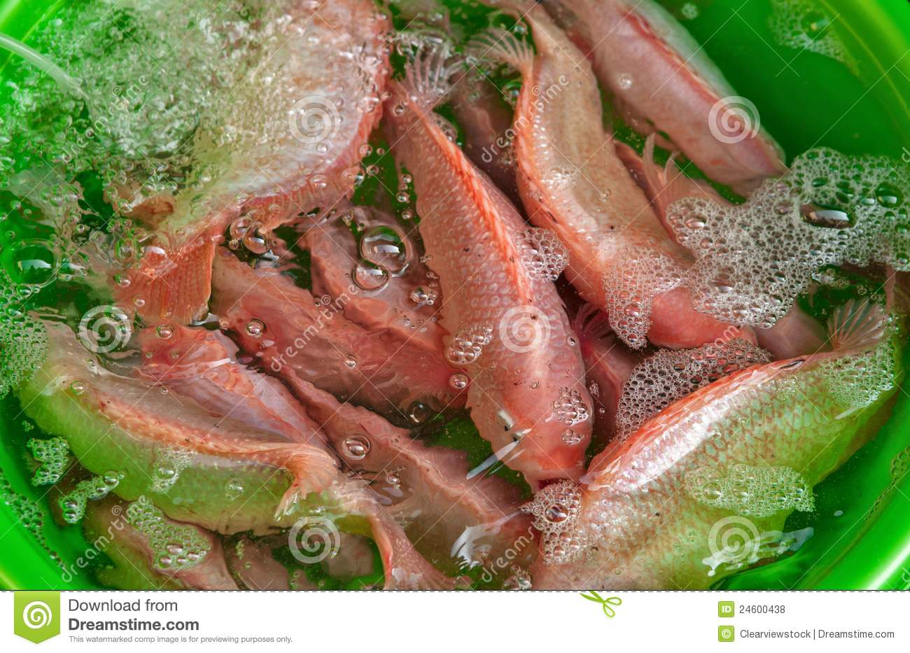 Fresh fish for sale royalty free stock photos image for Stock fish for sale