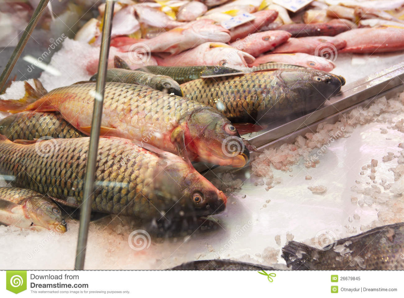 Fresh fish for sale royalty free stock photo image 26679845 for Stock fish for sale