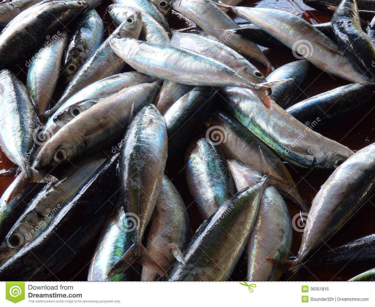 Fresh fish for sale royalty free stock photo image for Stock fish for sale