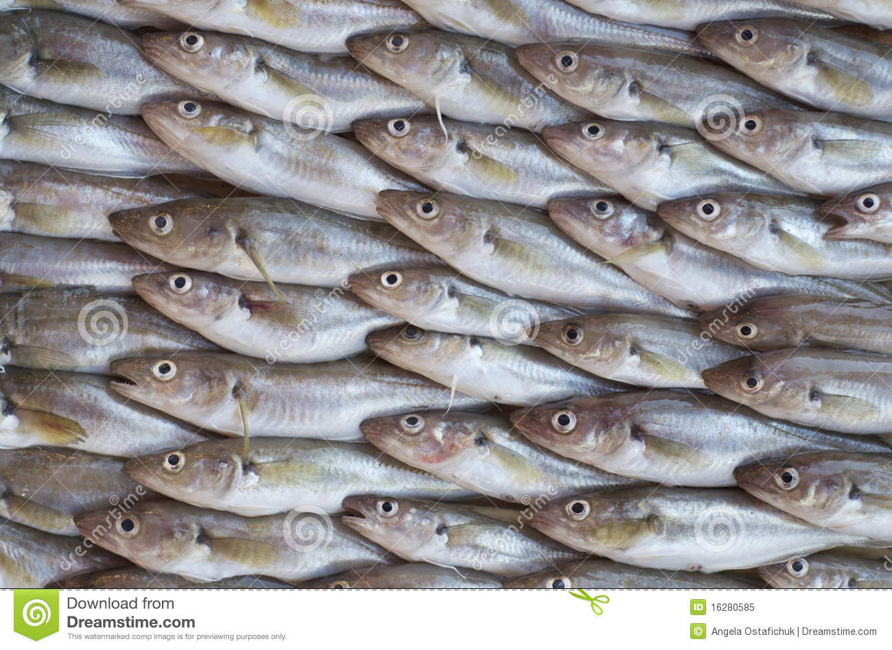 fresh fish for sale in a marketplace royalty free stock