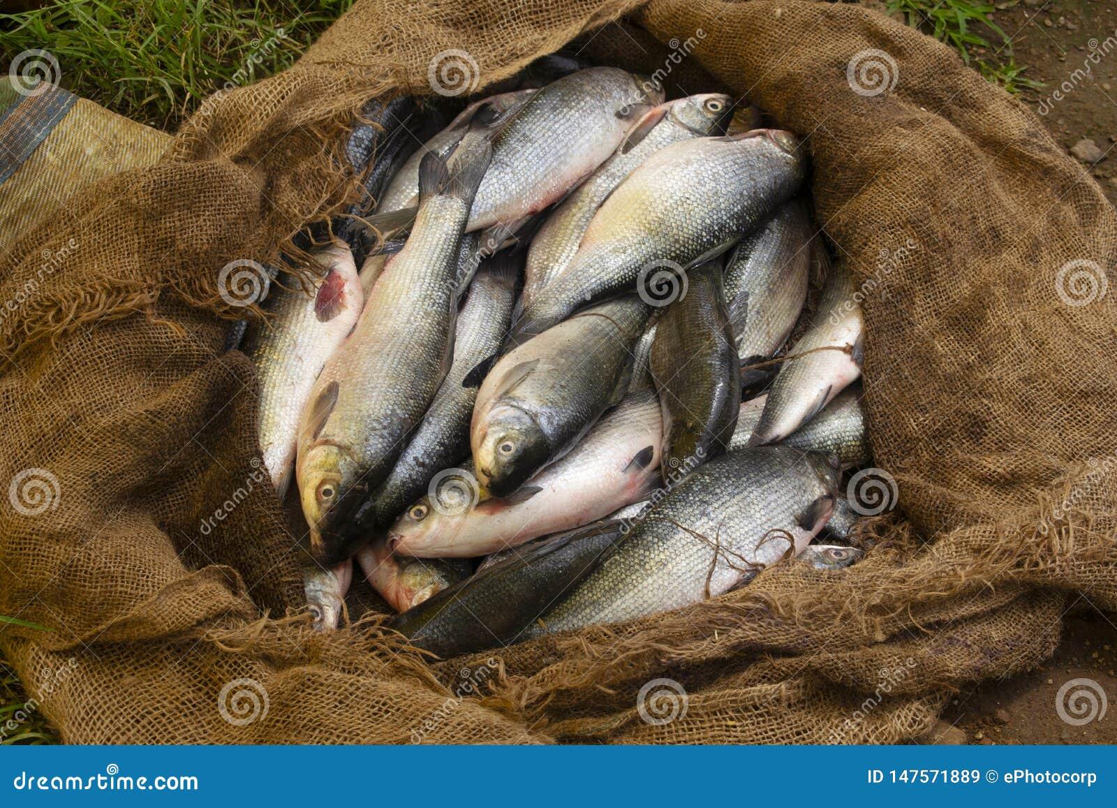 Fresh Fish On Sale At Rural Market, Titamba Village, Dharni