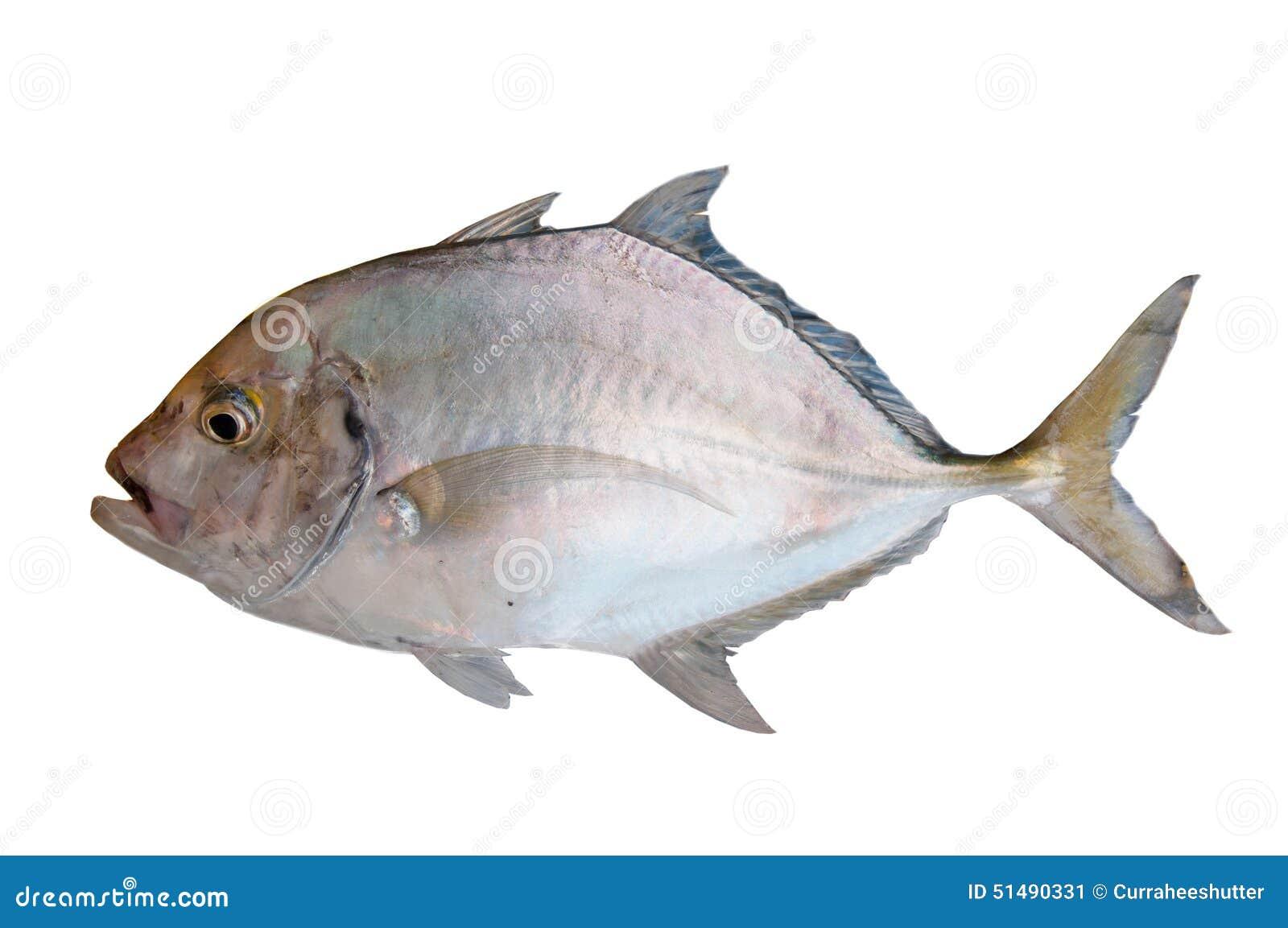 Fresh Sea Fish Stock Photography 89508542