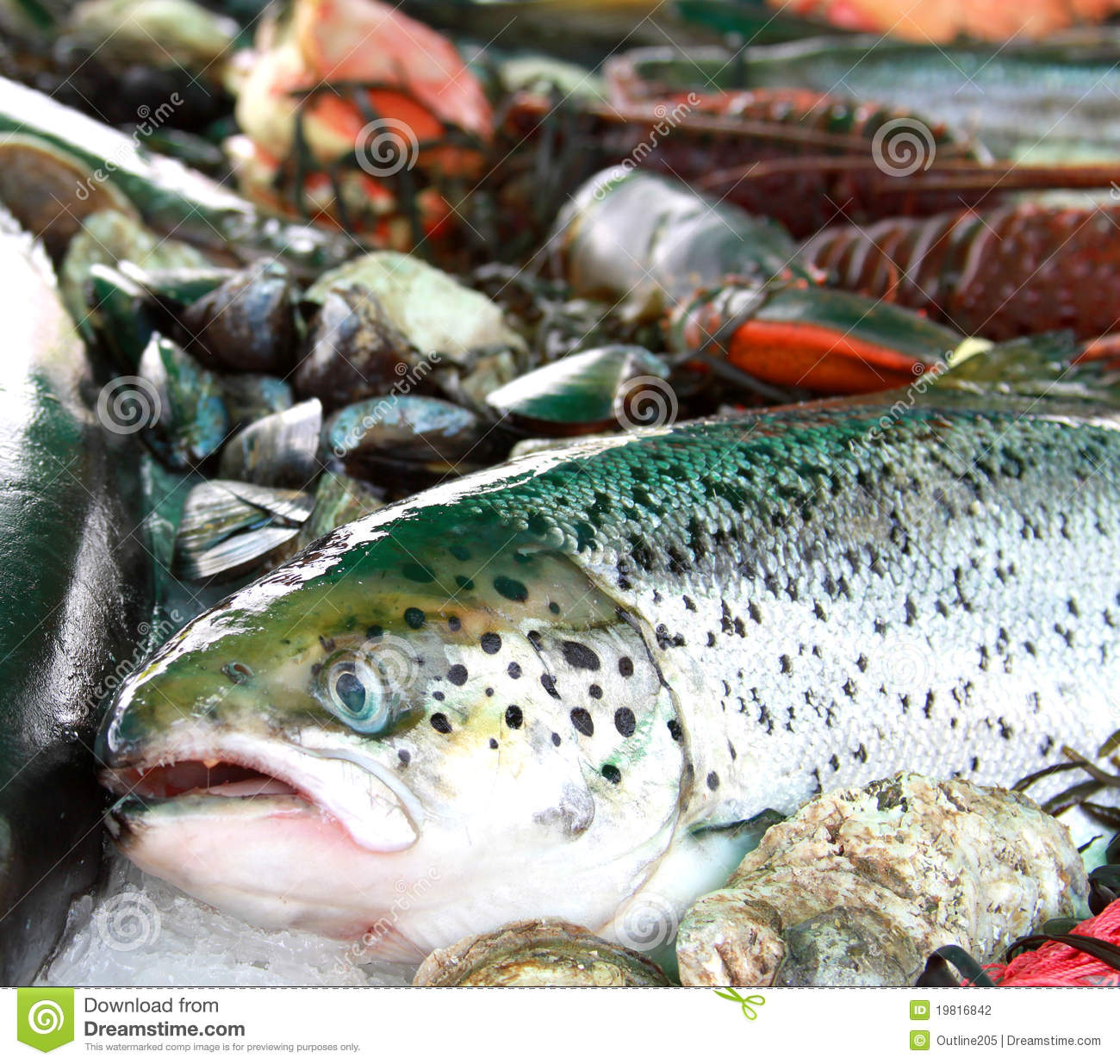 Fresh fish and seafood stock photo for Fish and seafood