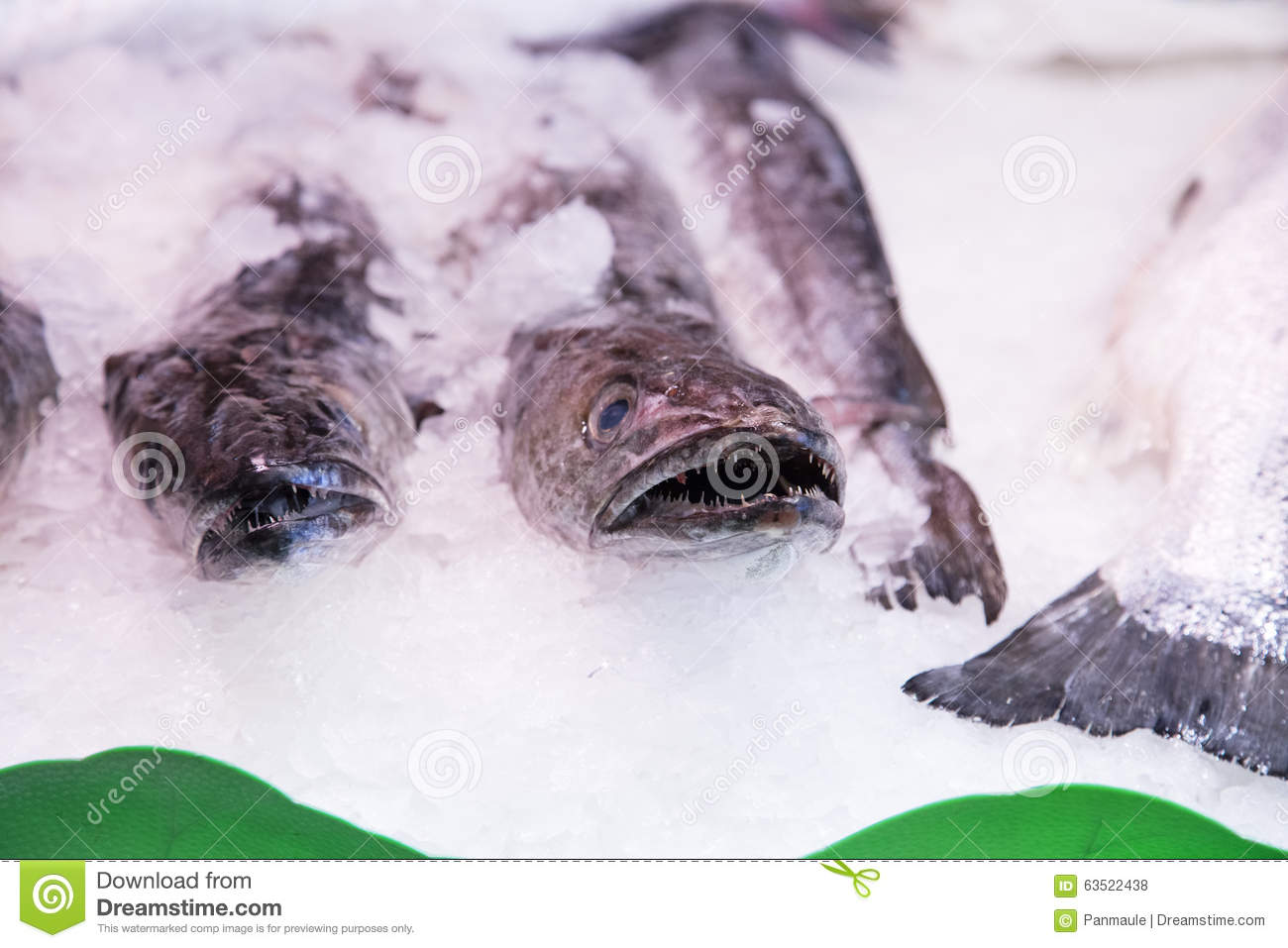 Fresh fish in a spanish market stock photo image 63522438 for Fish in spanish