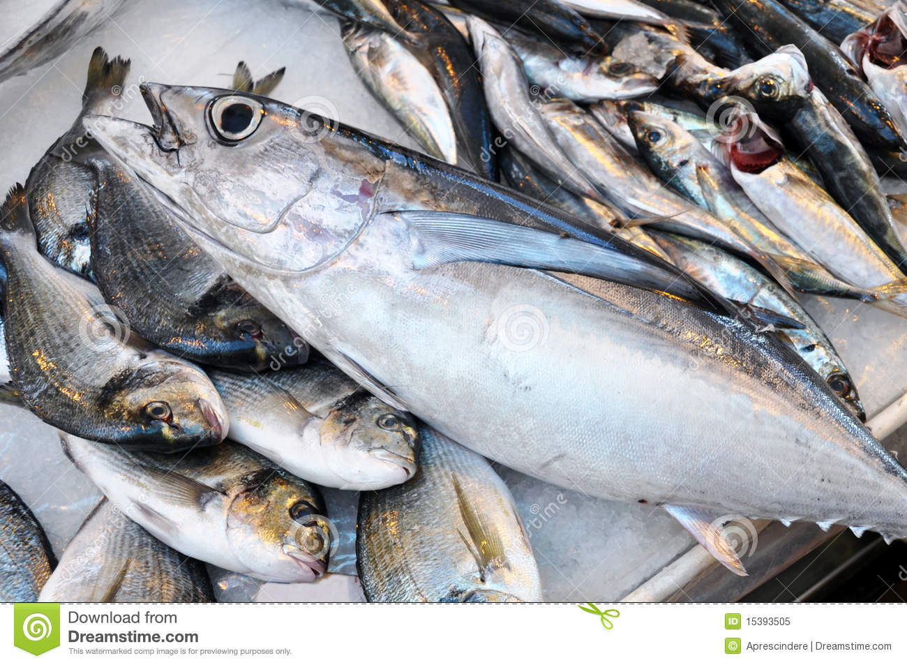 Fresh fish the tuna stock image image of eyes animal for Is tuna fish good for you