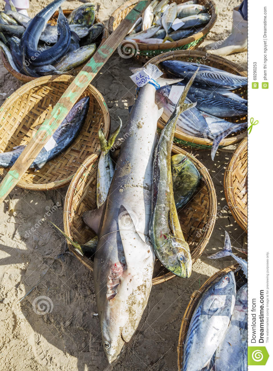 Fresh fish and tuna in basket on the beach editorial stock for Closest fish market
