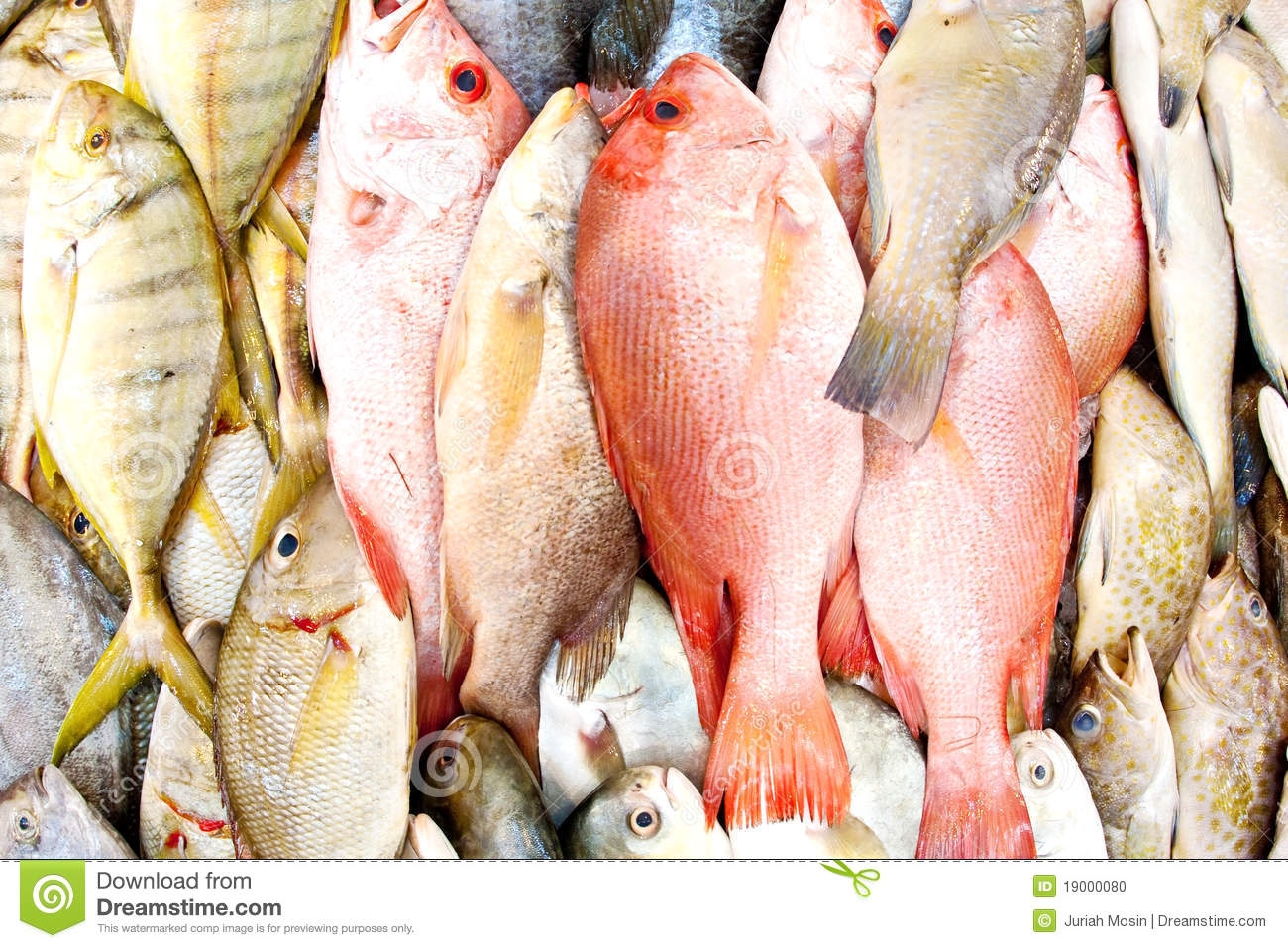Fresh fish in a wet market stock photo image 19000080 for Is a fish wet