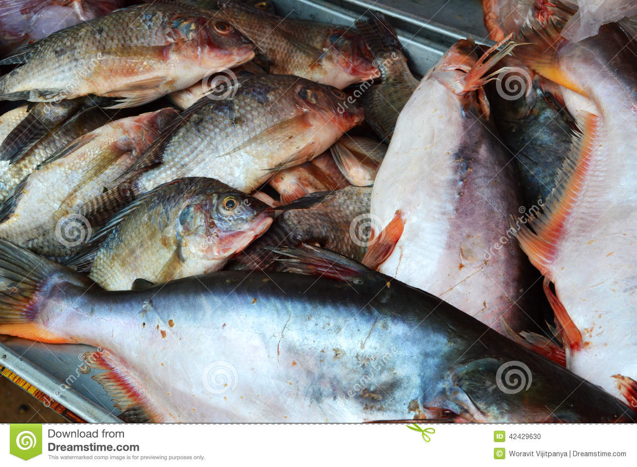 Fresh fish in a wet market stock photo image 42429630 for Is a fish wet