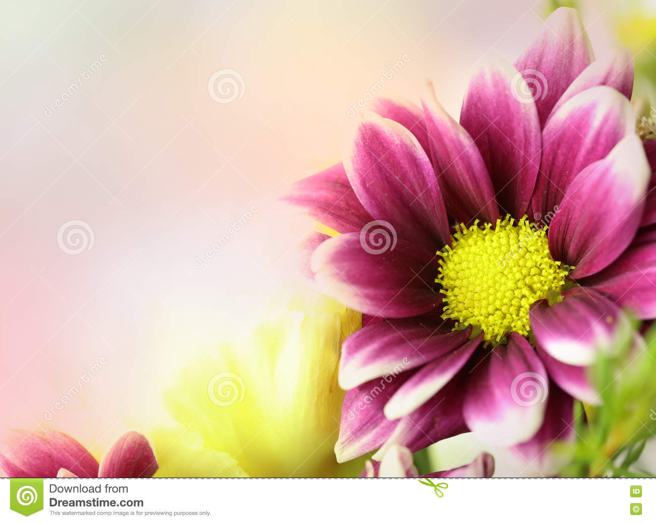 Download Fresh flowers. stock photo. Image of flowers, cheerful - 71199796