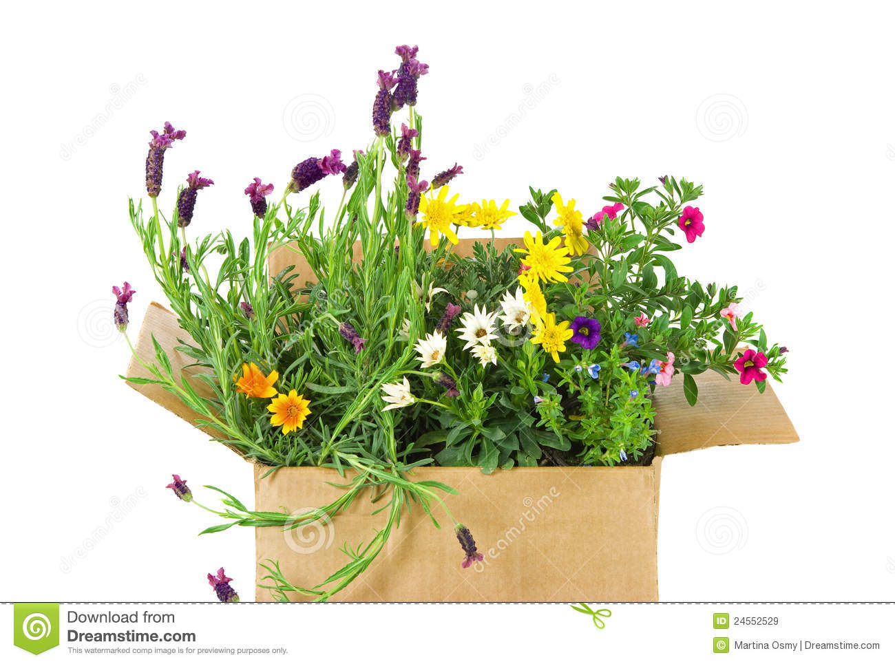 Fresh Flowers In A Box Royalty Free Stock Image