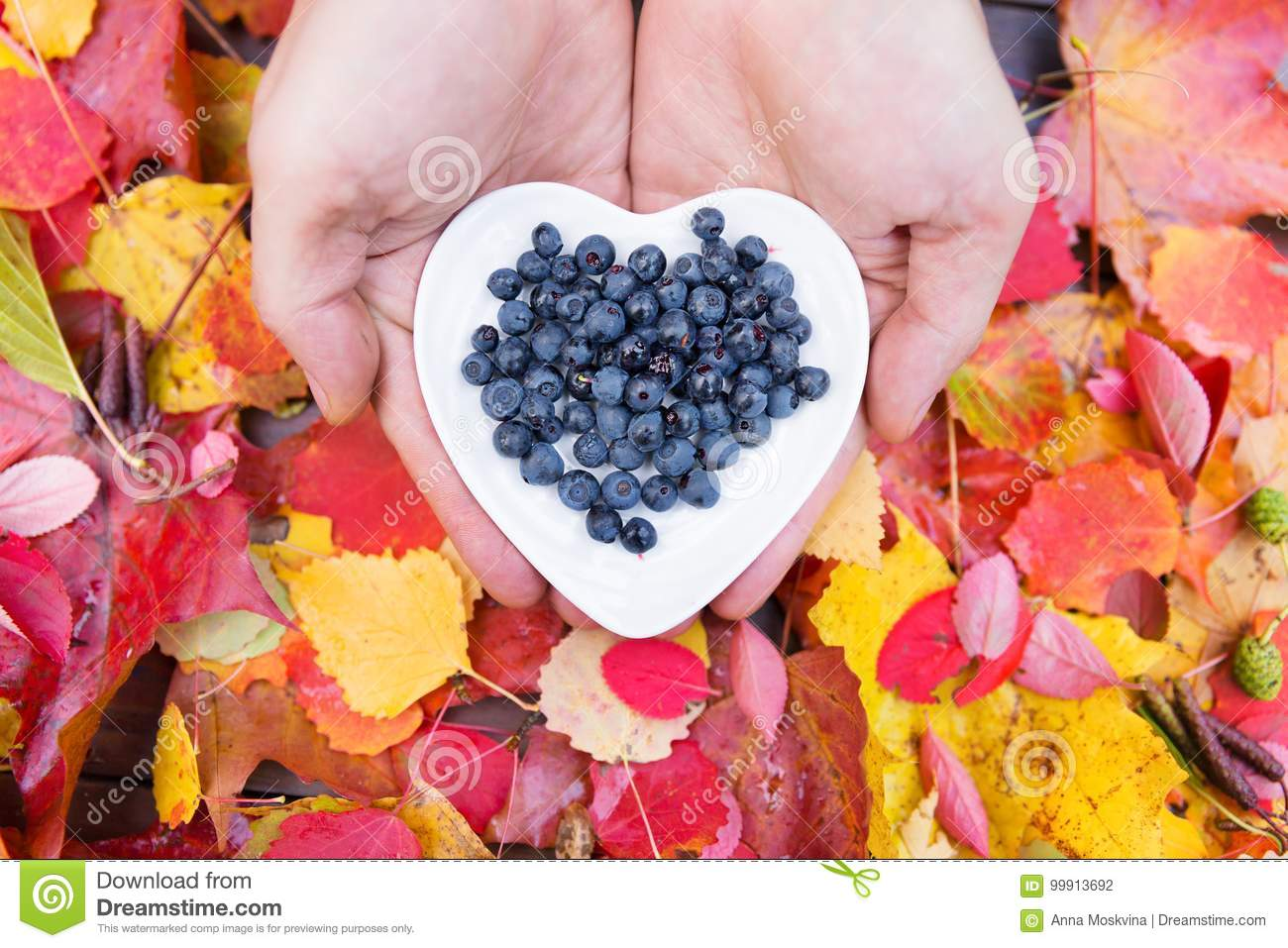 Blueberries In Hands At Colorful Fall Leaves Stock Photo ...