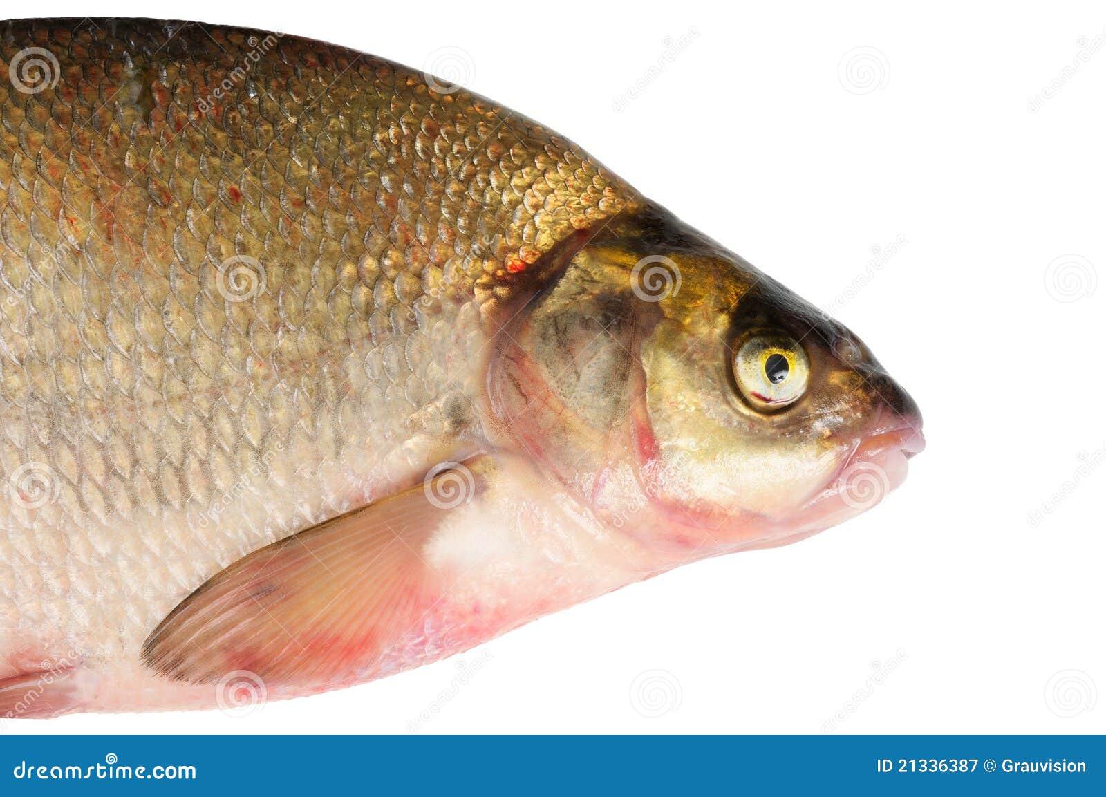Freshwater fish bream - Fresh Freshwater Fish Bream