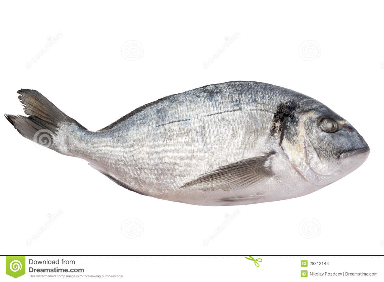 Fresh fish royalty free stock photo for How to freeze fish