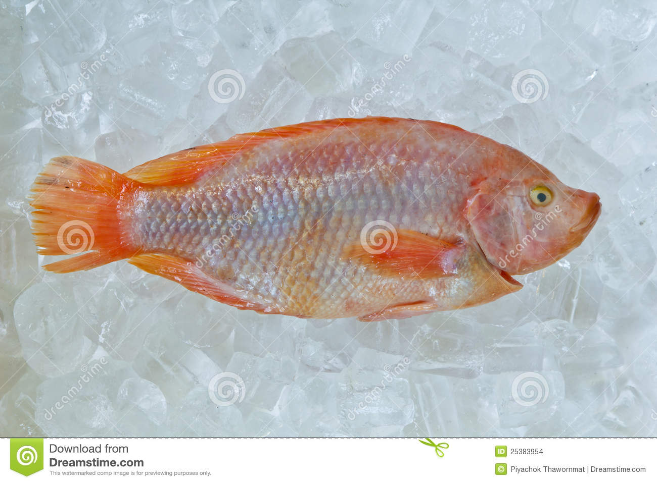 Fresh frozen fish for sale stock images image 25383954 for How to freeze fish