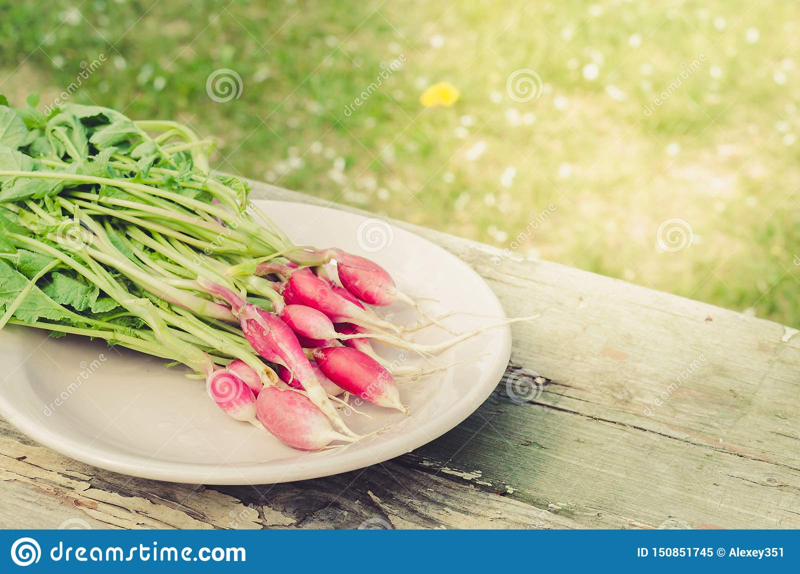 Fresh garden radish in a bowl/fresh garden radish in a bowl on an old wooden background
