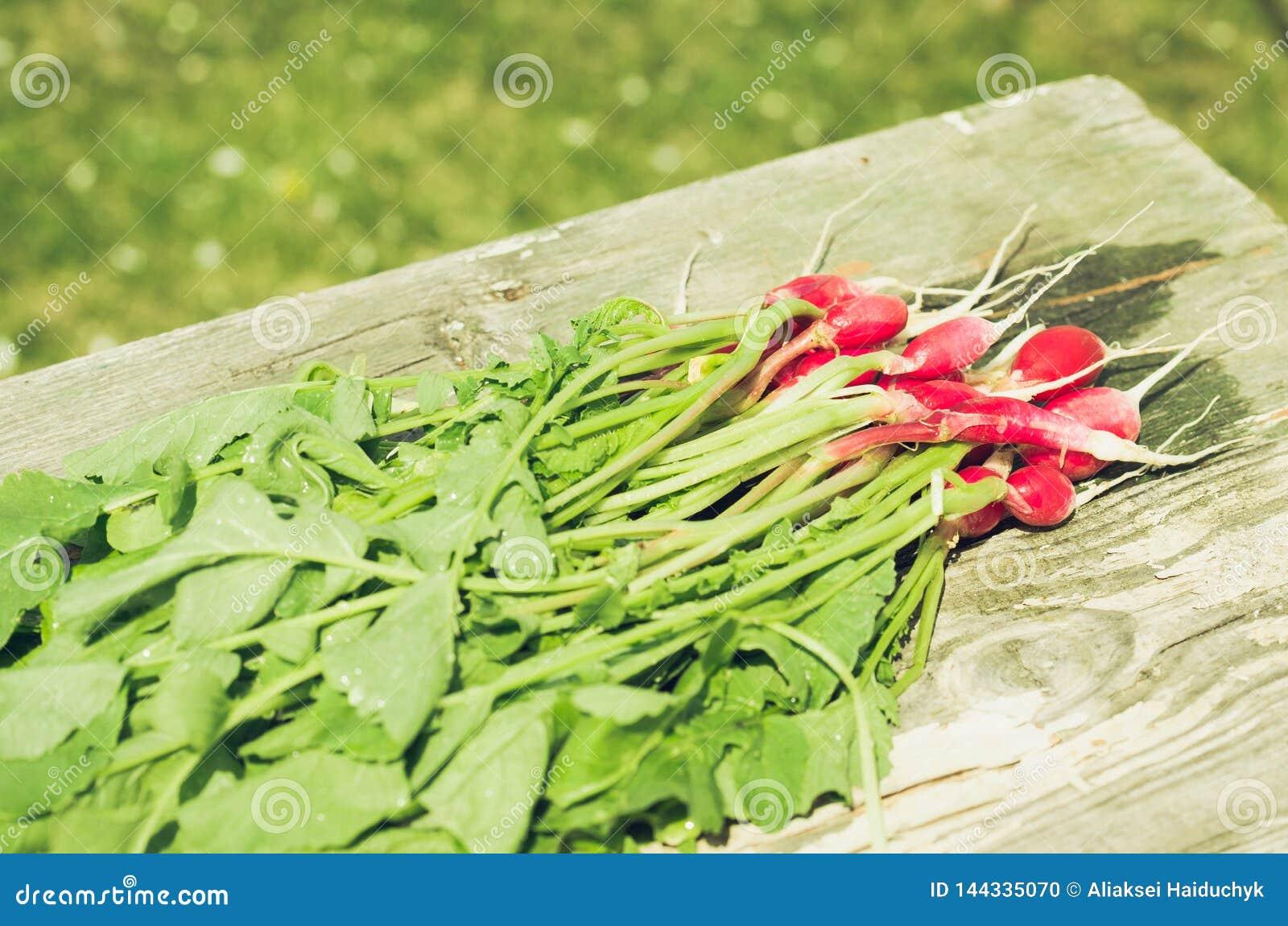 fresh garden radish on an old wooden background/fresh garden radish on an old wooden background