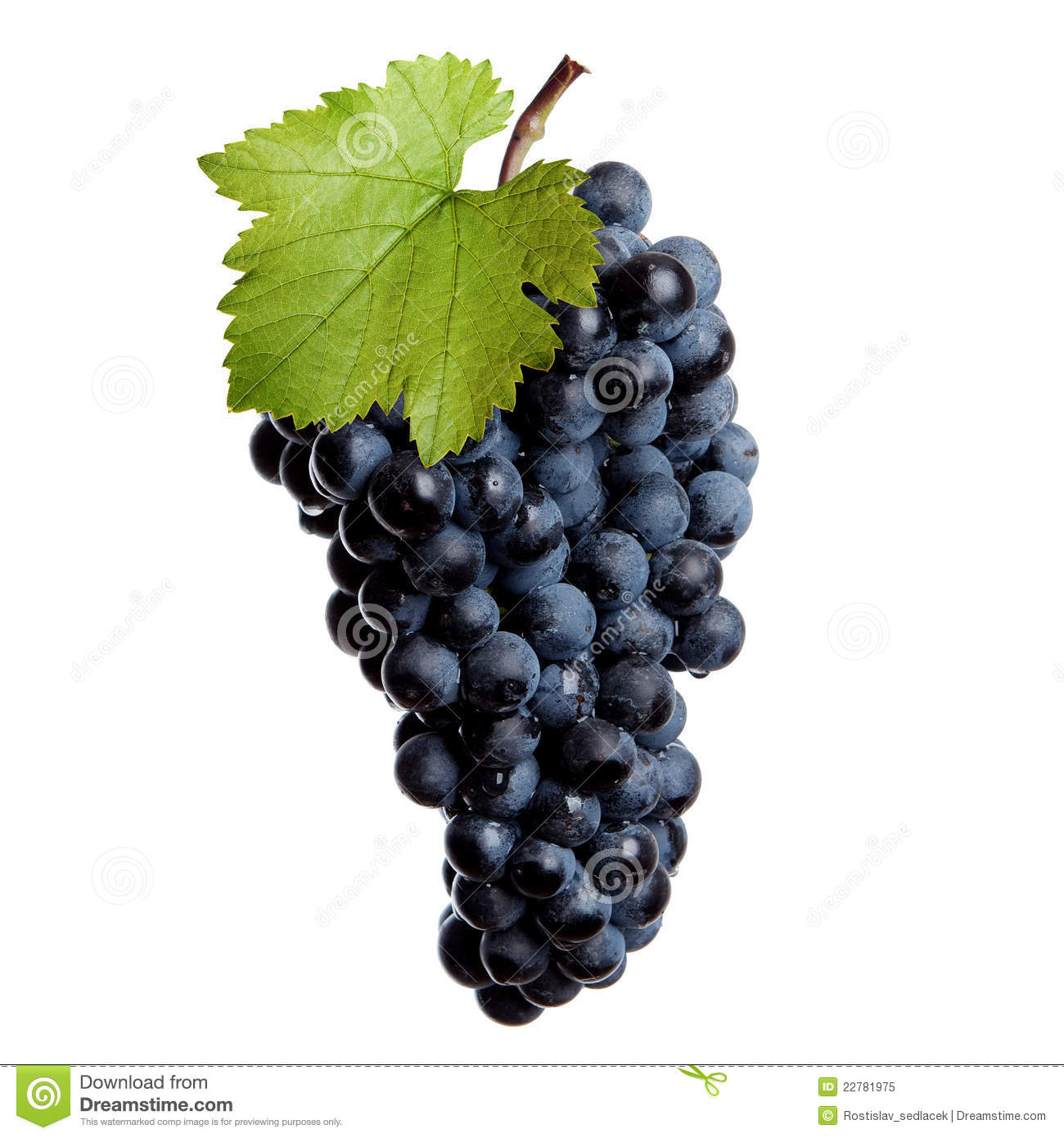 Red Wine Grapes | www.pixshark.com - Images Galleries With ...