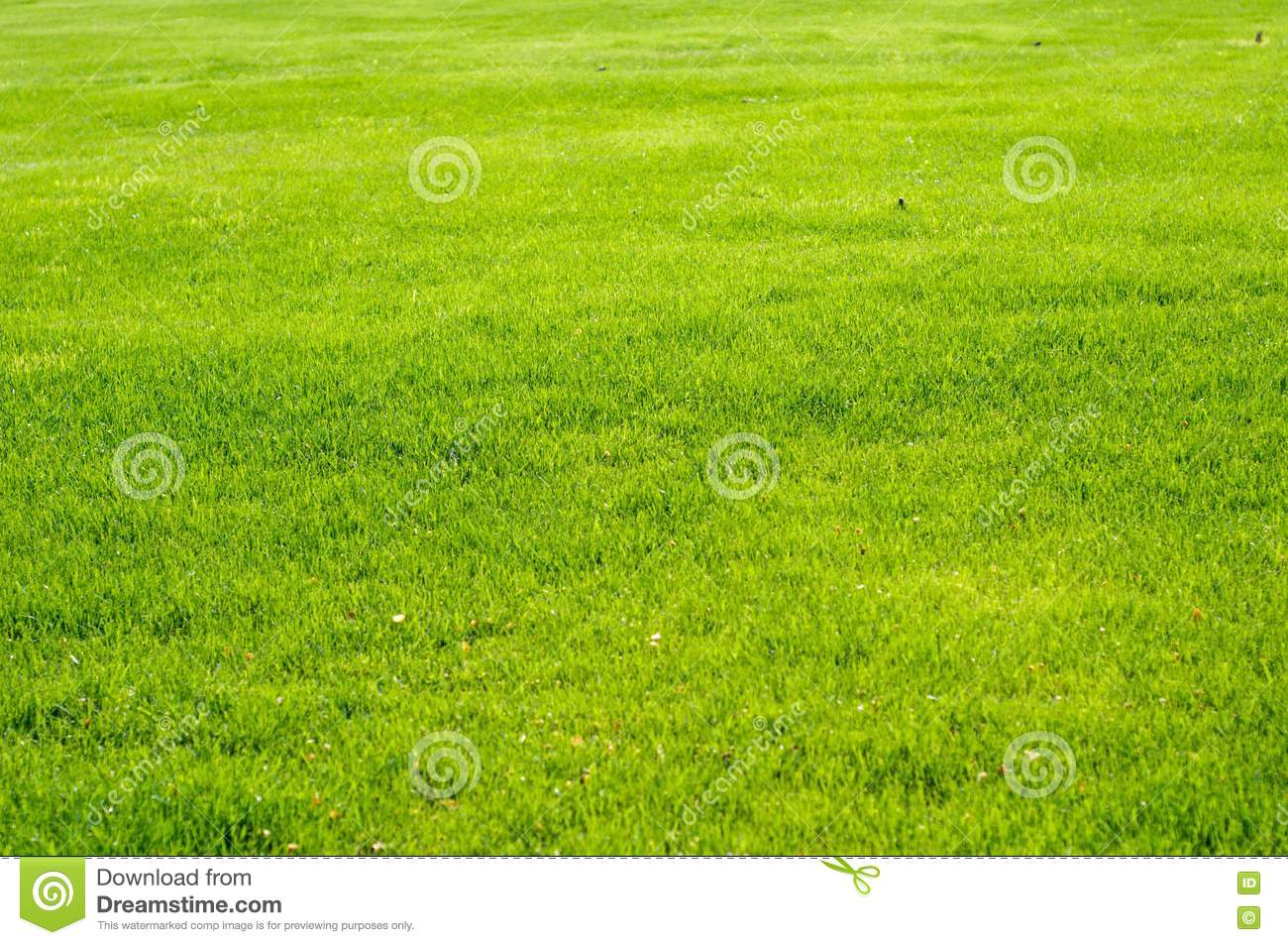 Fresh Grass Stock Photo Royalty Free Stock Image - Image: 13902206: www.dreamstime.com/royalty-free-stock-image-fresh-grass-stock-photo...