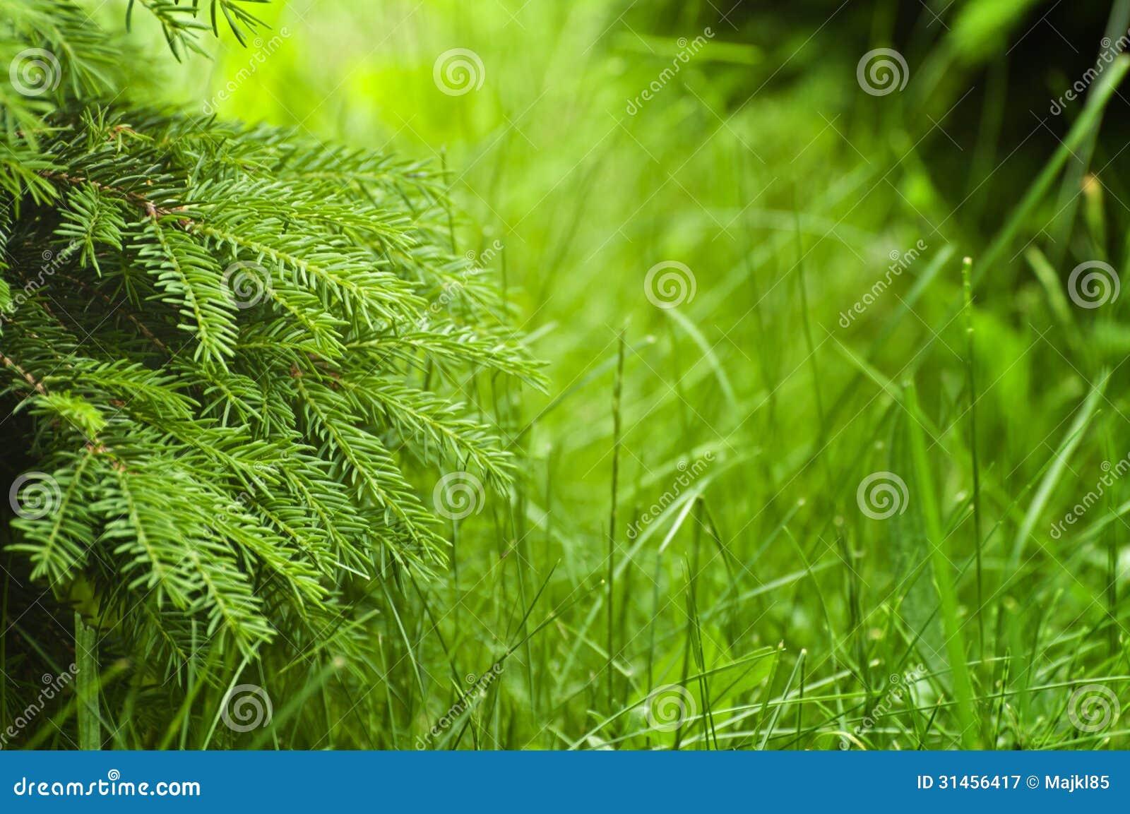 nature spring green tree - photo #16