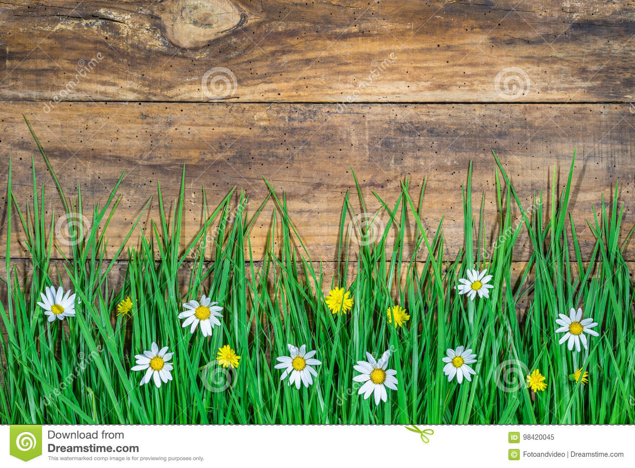 Blooming meadow with green grass and beautiful flowers stock image download blooming meadow with green grass and beautiful flowers stock image image of countryside izmirmasajfo