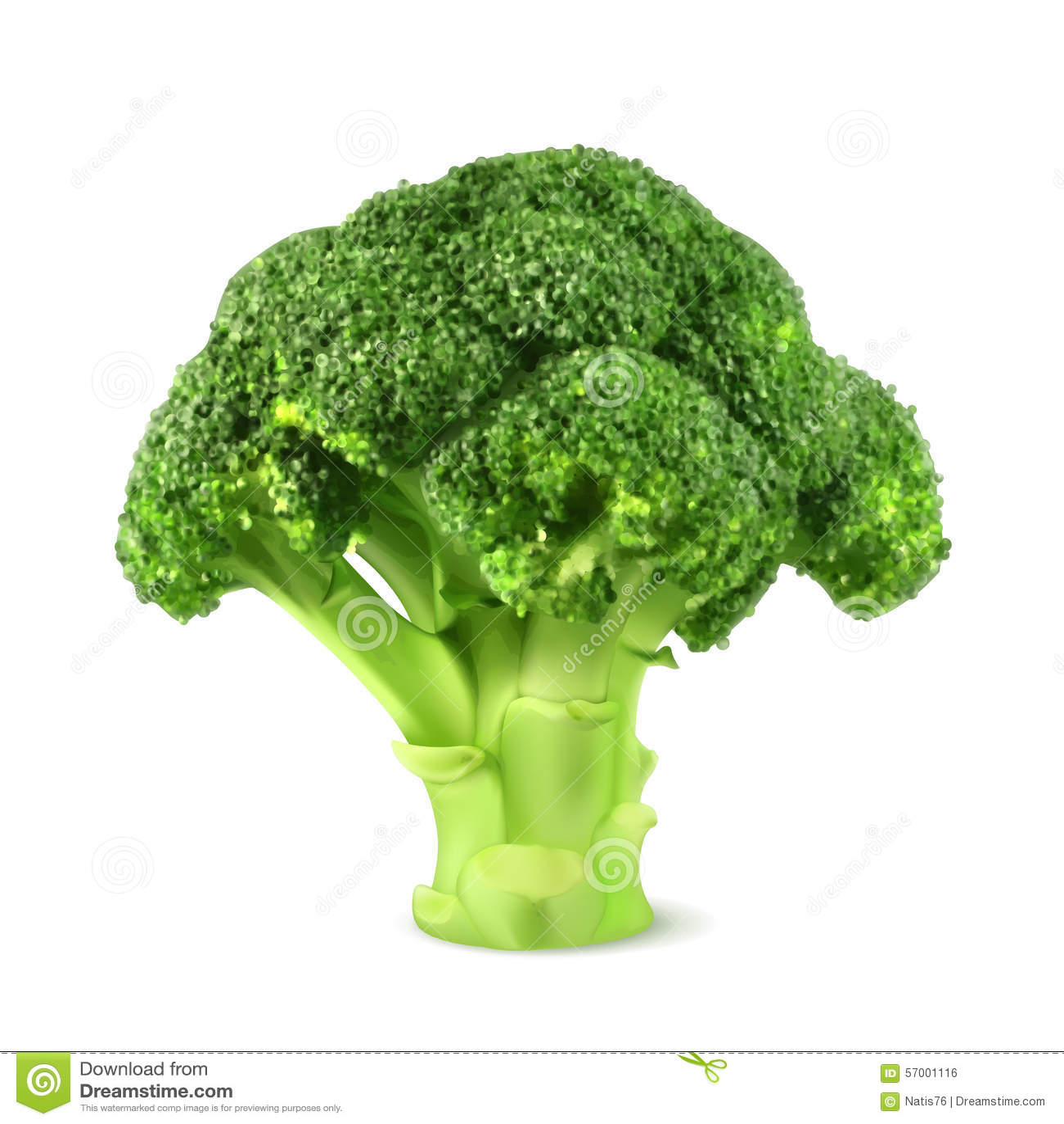 Fresh green broccoli