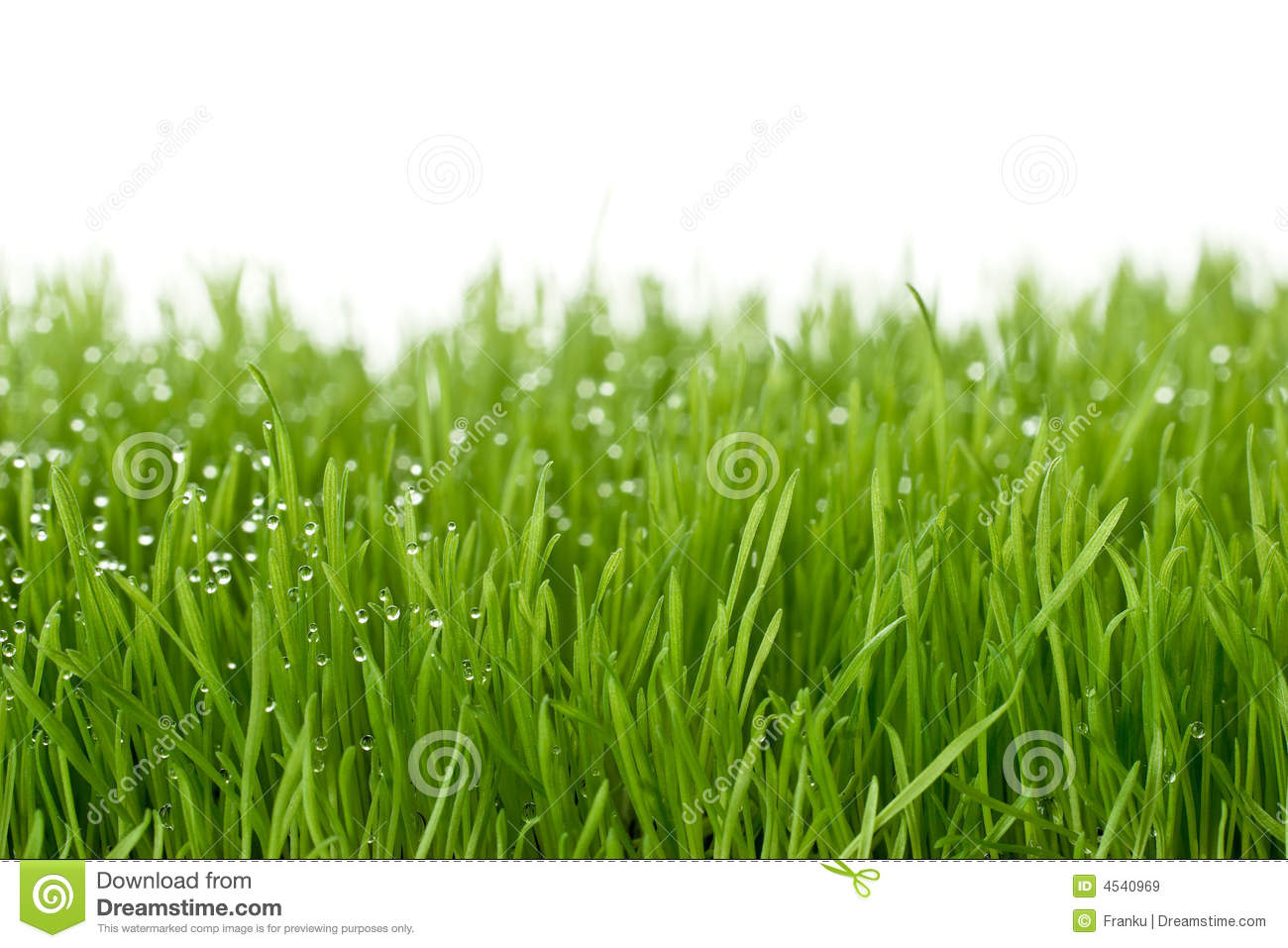 fresh green gras stock image image of grass country 4540969