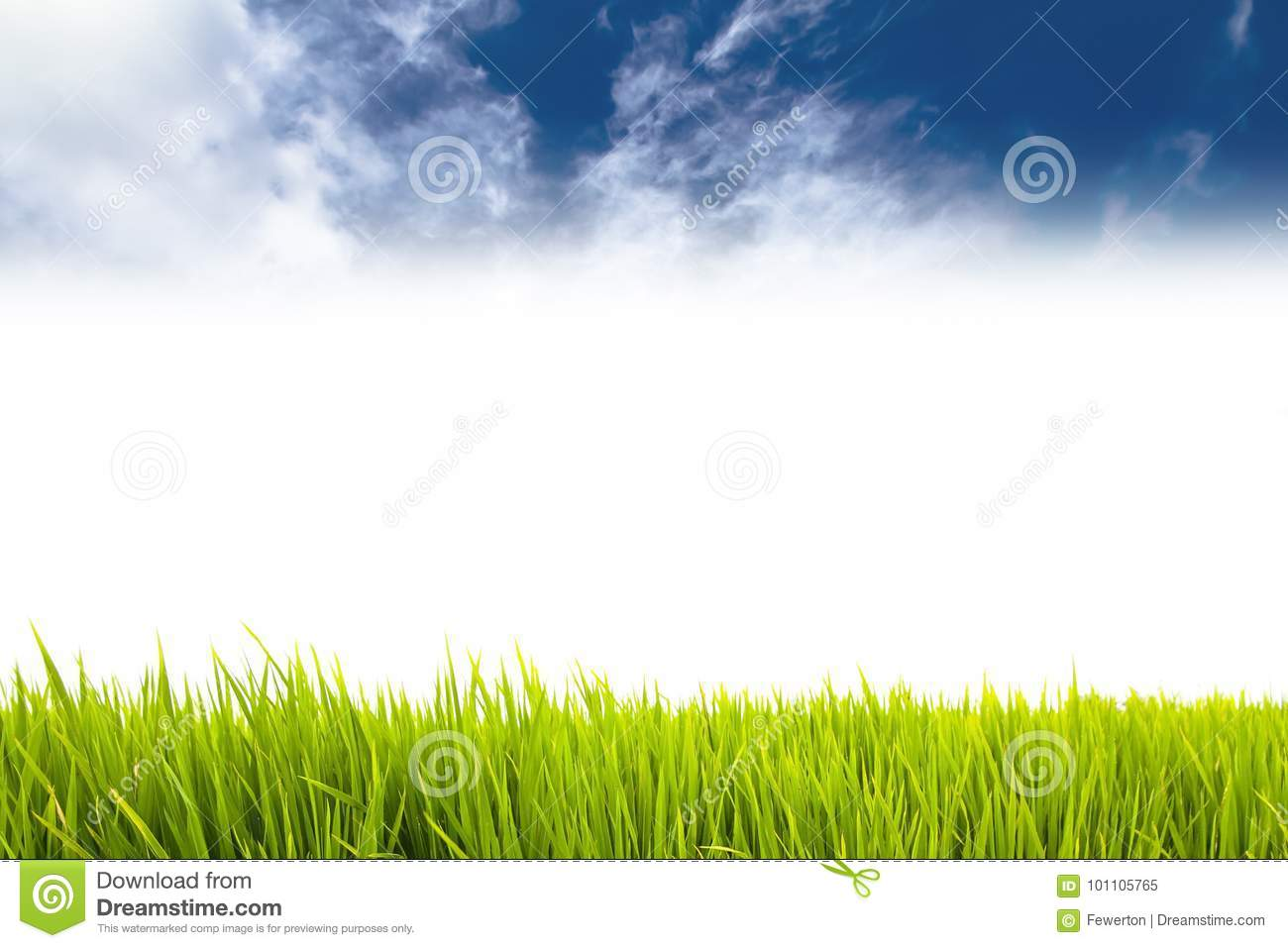 Fresh green grass as border on the lower side of the horizontal frame in a seamless empty white background with blue sky