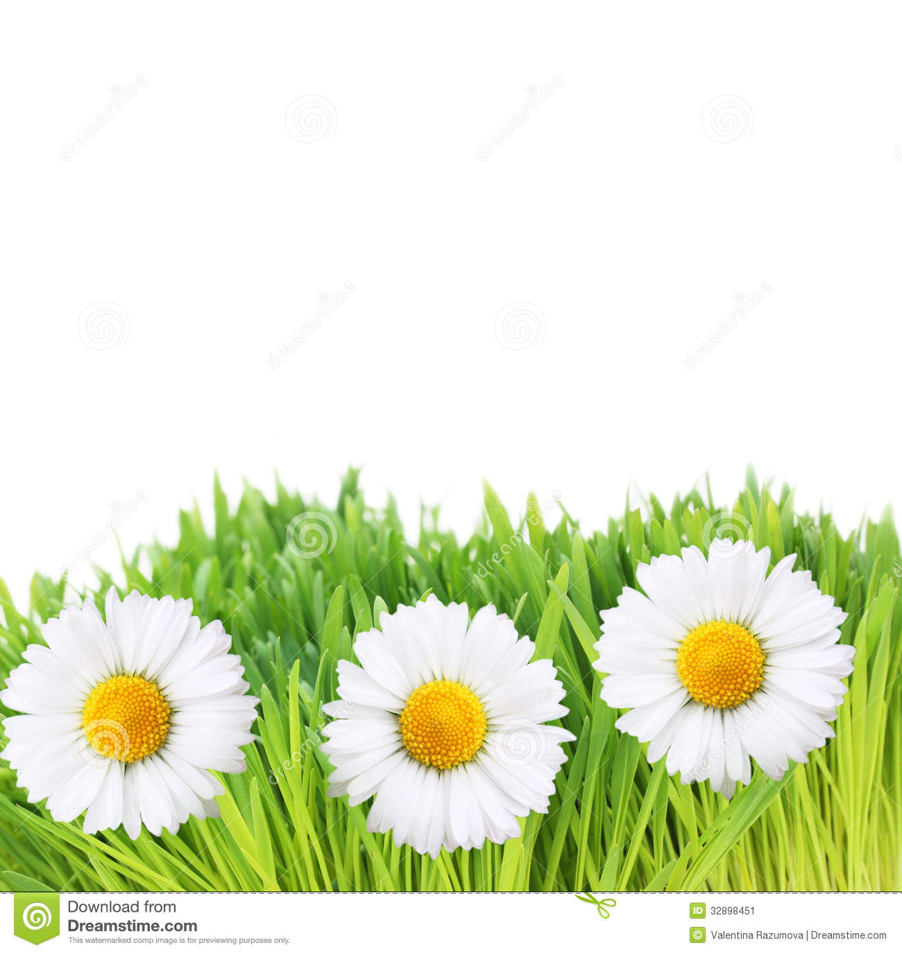 Fresh green water grass flowers texture stock photo image 59484830 fresh green grass and daisy flowers stock image dhlflorist Image collections