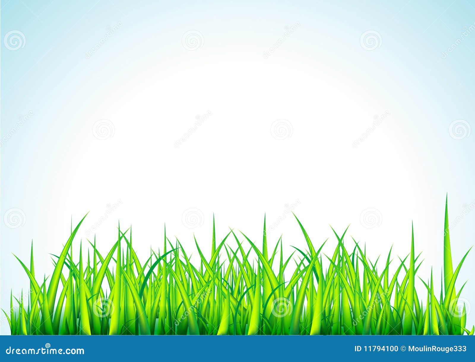 Fresh Green Grass Illustration Stock Vector Image 11794100