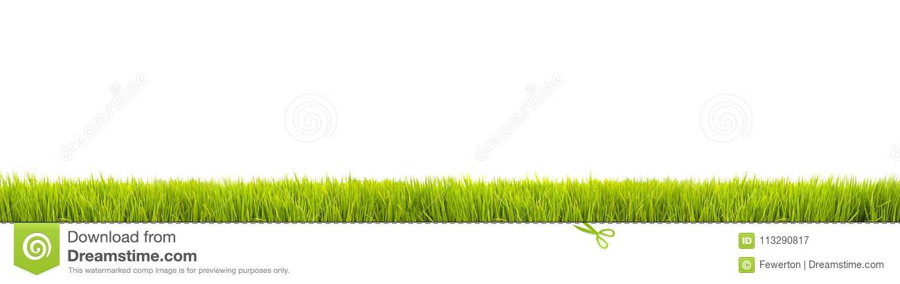 Green grass: fresh green grass large panorama banner as frame border in a seamless empty white background