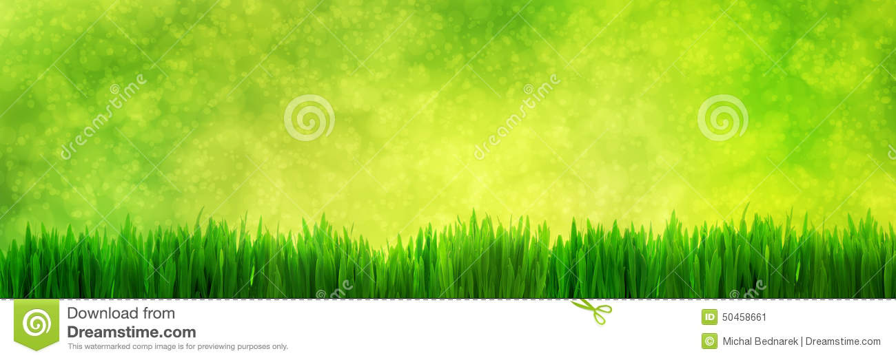 Fresh Green Grass Panorama On Natural Blur Nature Background Stock Photo - Image: 50458661