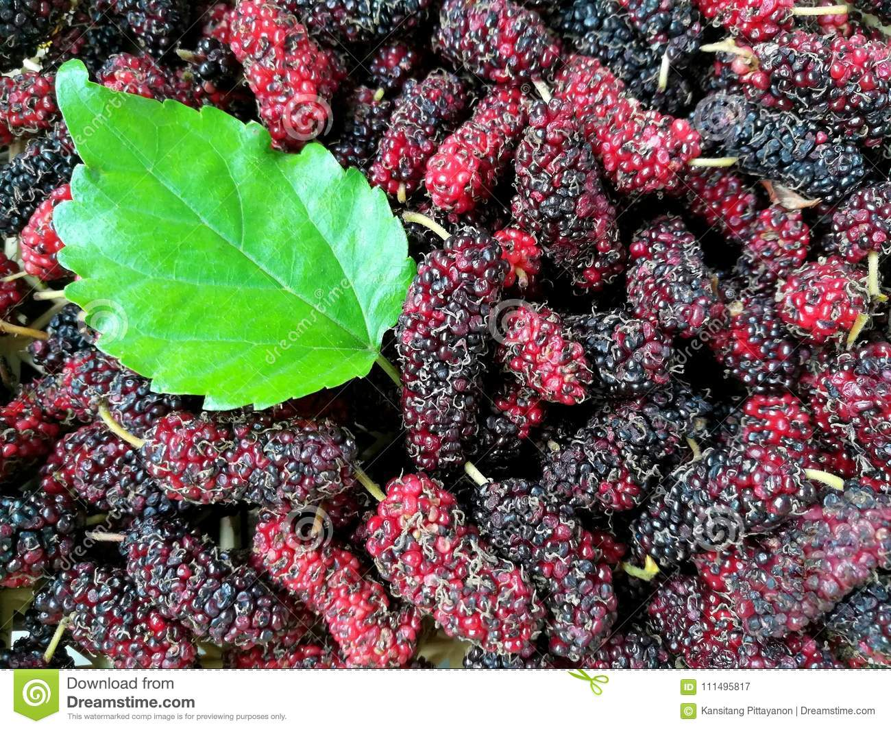 Fresh Green Leaf Delicious Mulberry Background Beautiful