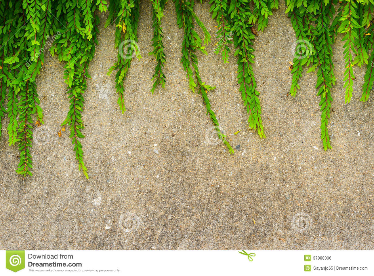 Download Fresh Green Leaf Plant On Grunge Wall Background. Stock Photo - Image of concrete, background: 37888096