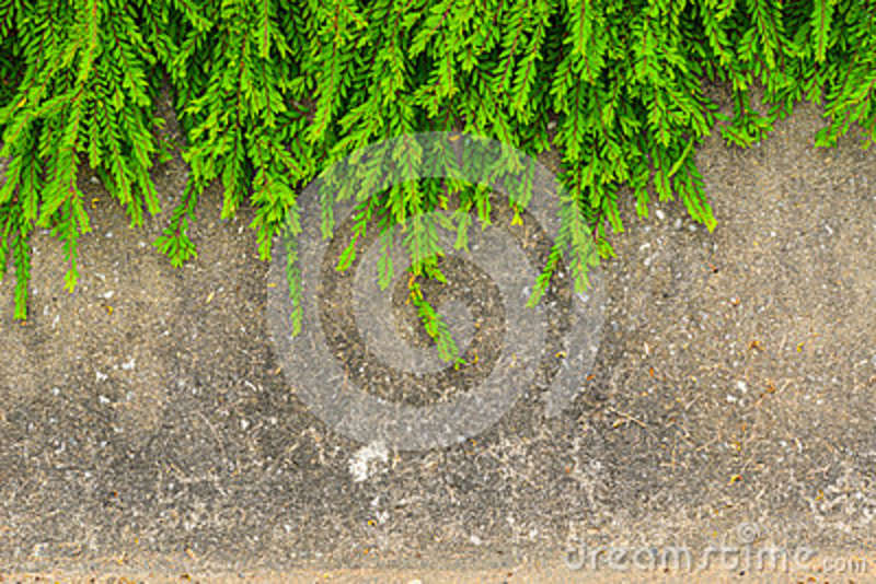 Download Fresh Green Leaf Plant On Grunge Wall Background. Stock Photo - Image of fence, home: 37888398