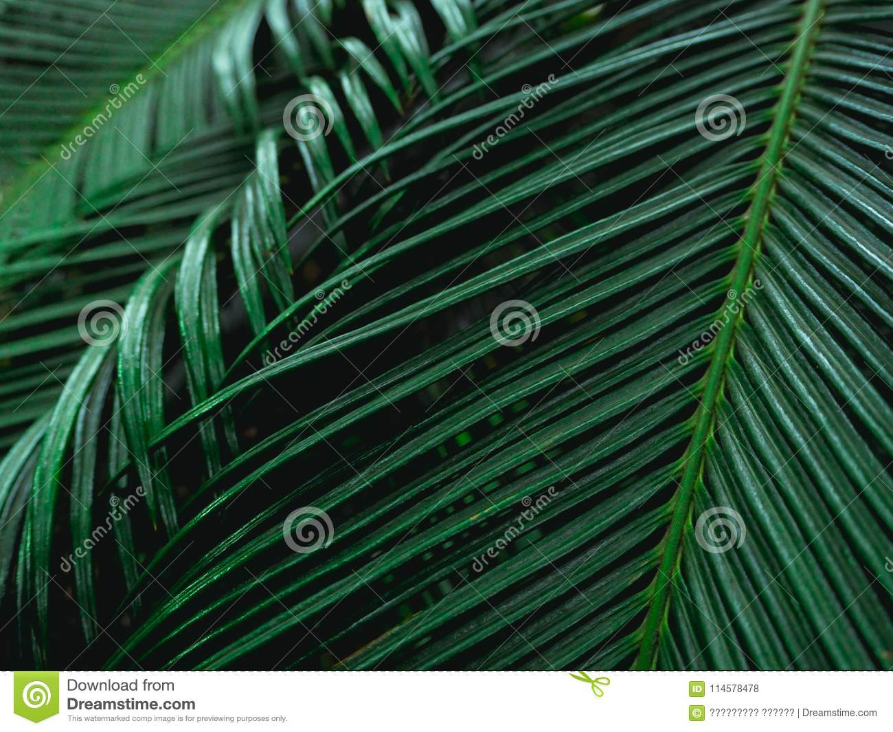 Dark Tone Leaf In Garden For Natural Tropical Texture Background And