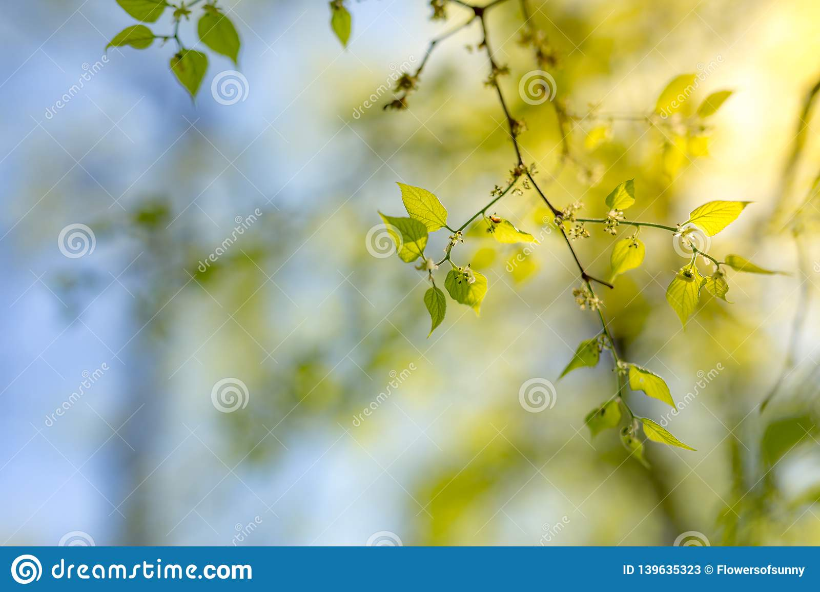 Fresh And Green Leaves Nature Background Freshness And New