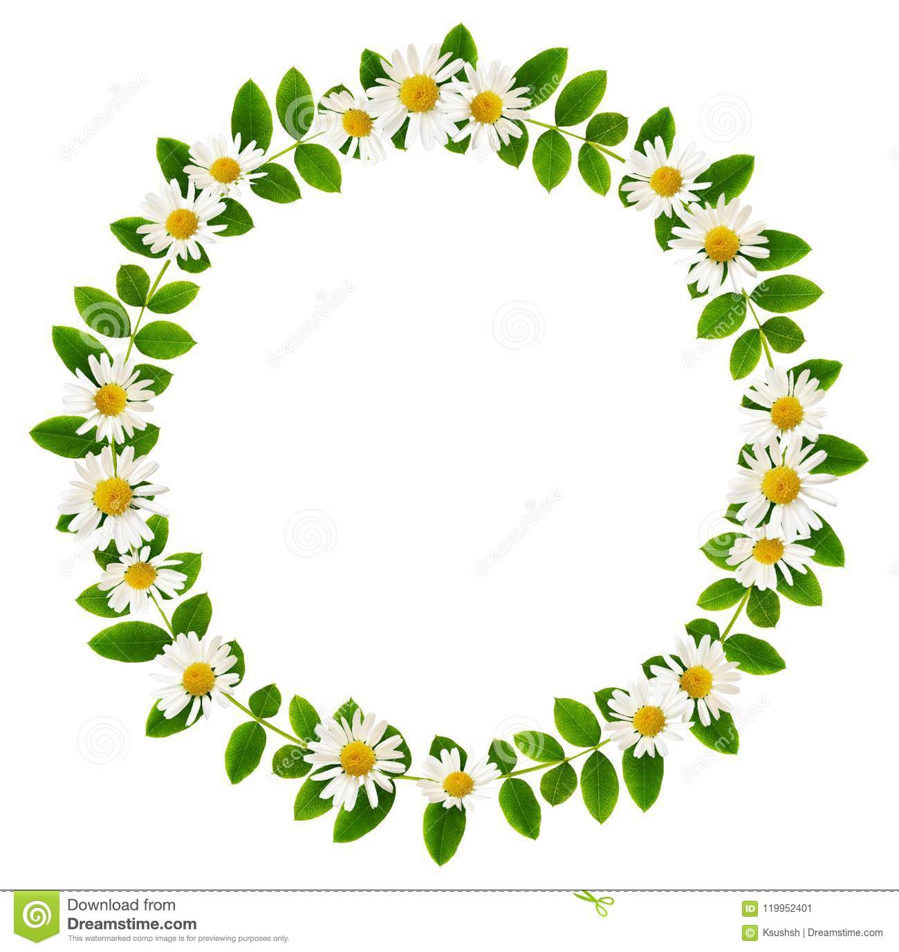 Fresh green leaves of Siberian peashrub and daisy flowers in a r