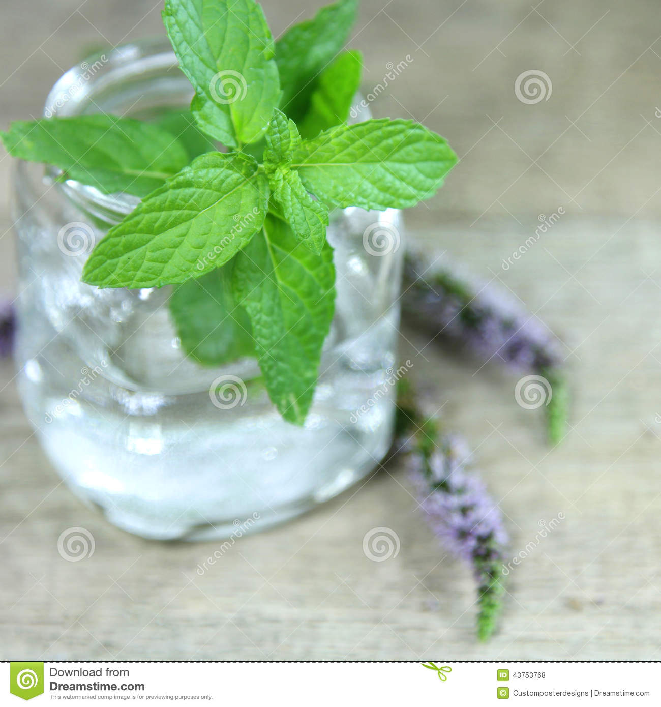 Download Fresh Green Mint Plant Leaves In A Small Jar. Stock Photo - Image of life, nature: 43753768
