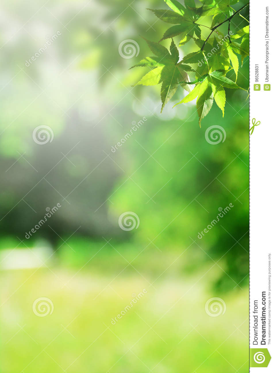 Fresh Green Nature Blur Background Stock Image Image Of Copy Light 96528831