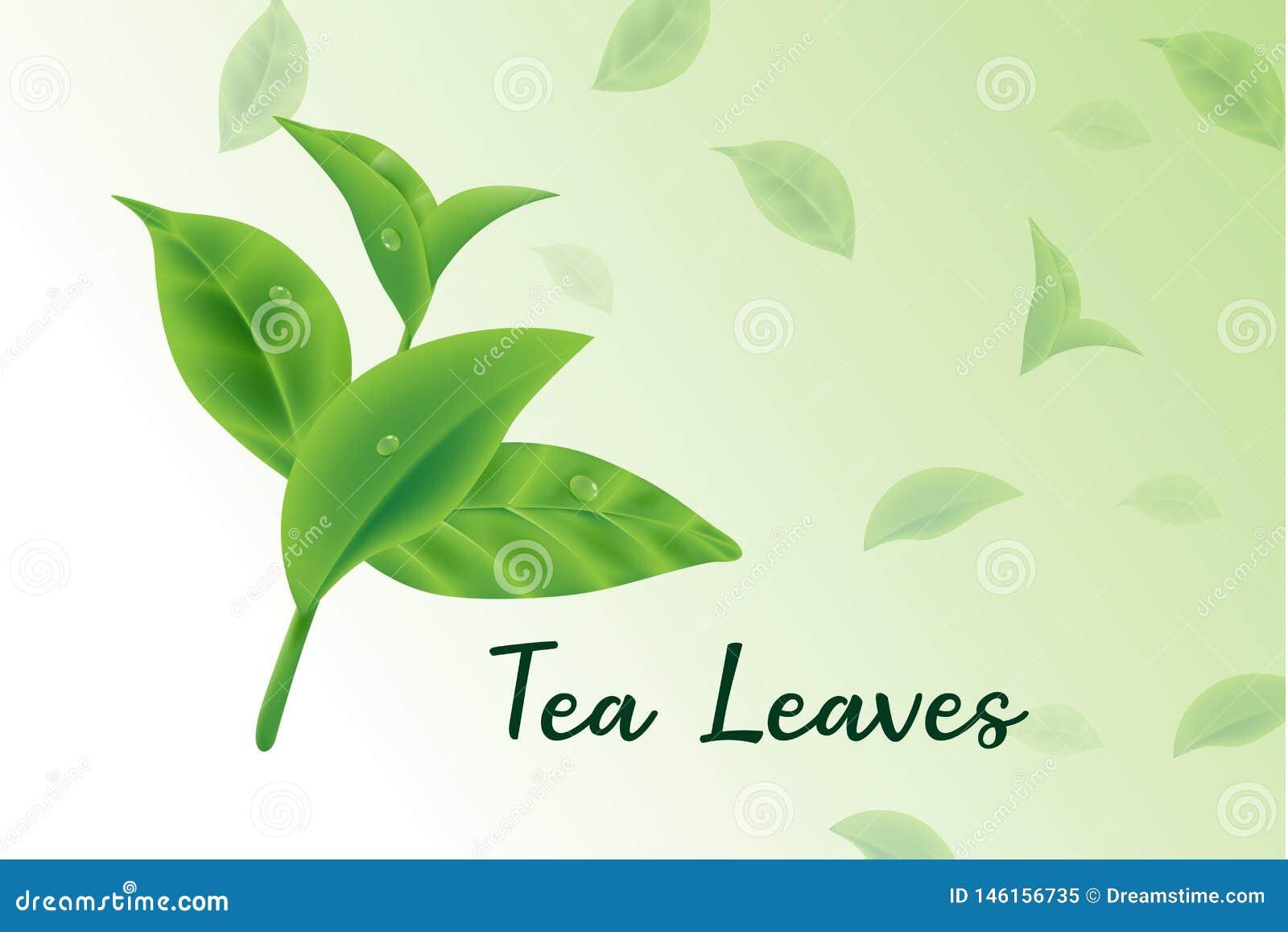 Fresh green tea leaves vector realistic 3d, tea leaves pattern
