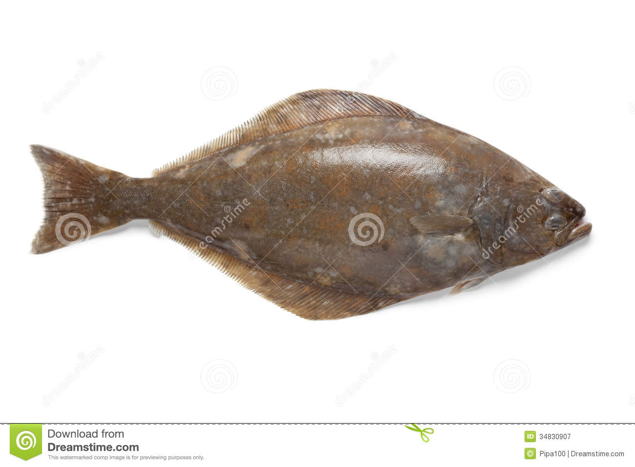 Fresh halibut fish stock image image of halibut fresh for How to cook halibut fish
