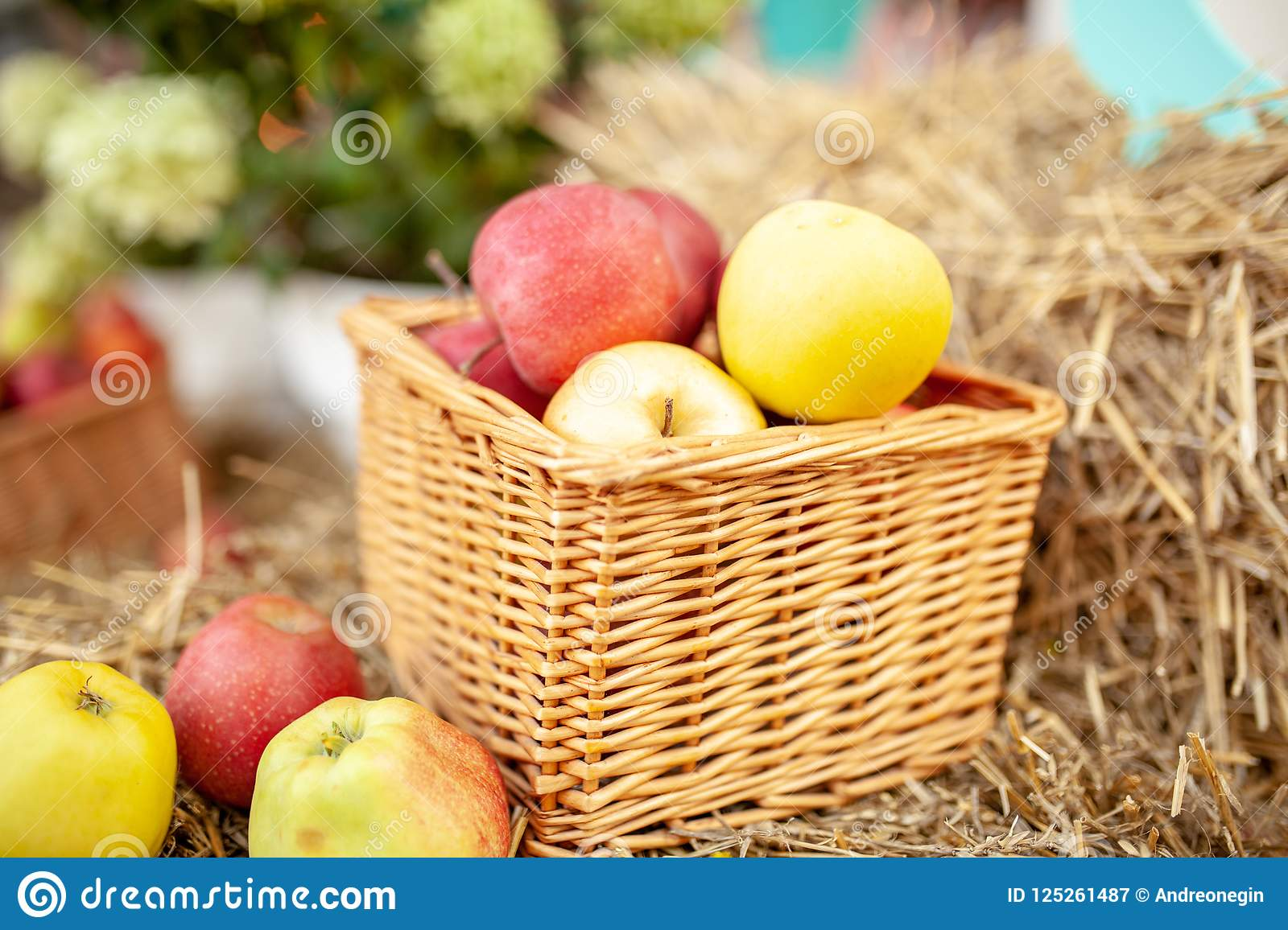 Fresh Harvest Of Apples  Nature Theme With Red Grapes And
