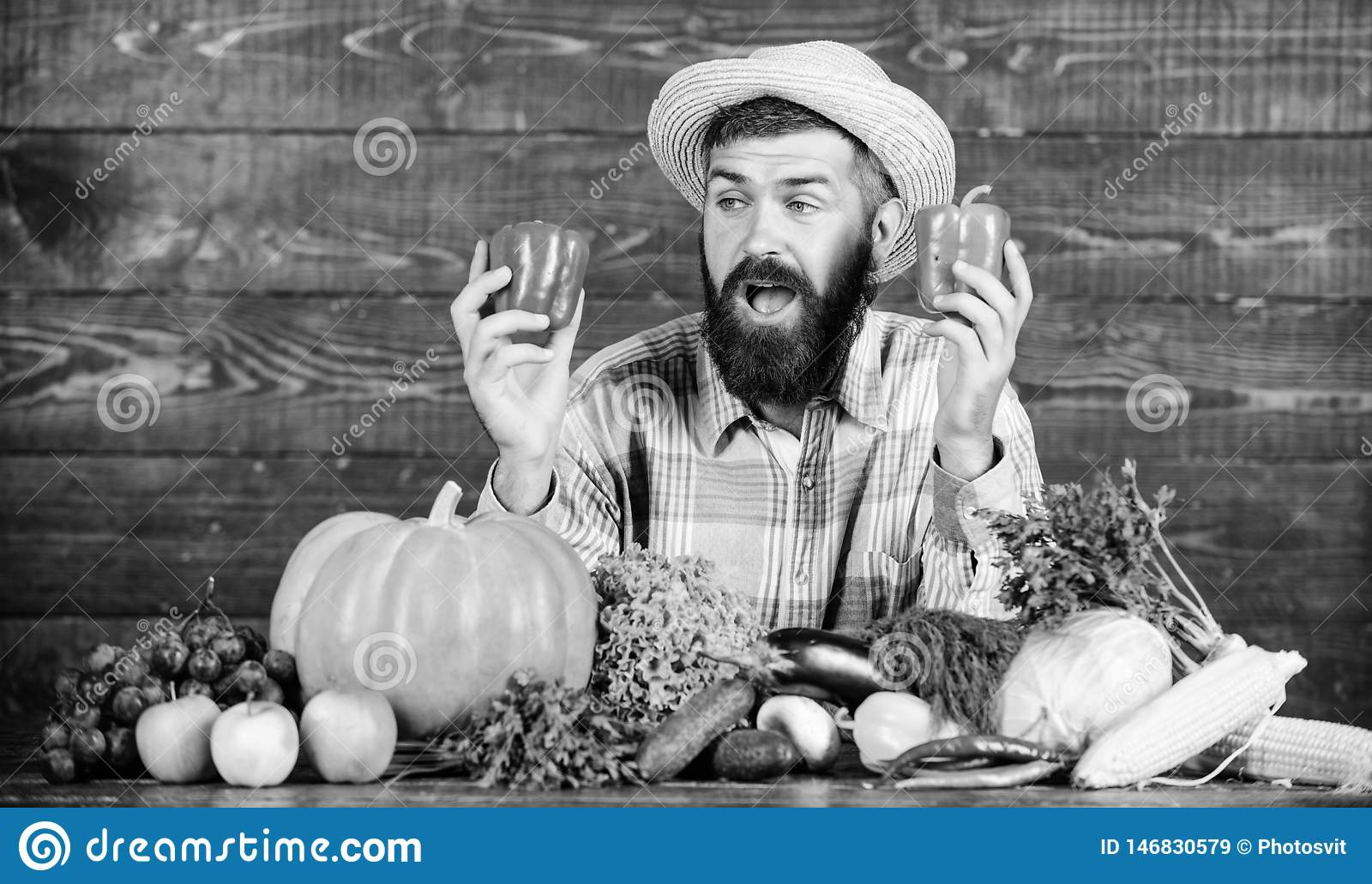 Only fresh and healthy food. bearded mature farmer. harvest festival. man chef with rich autumn crop. organic and